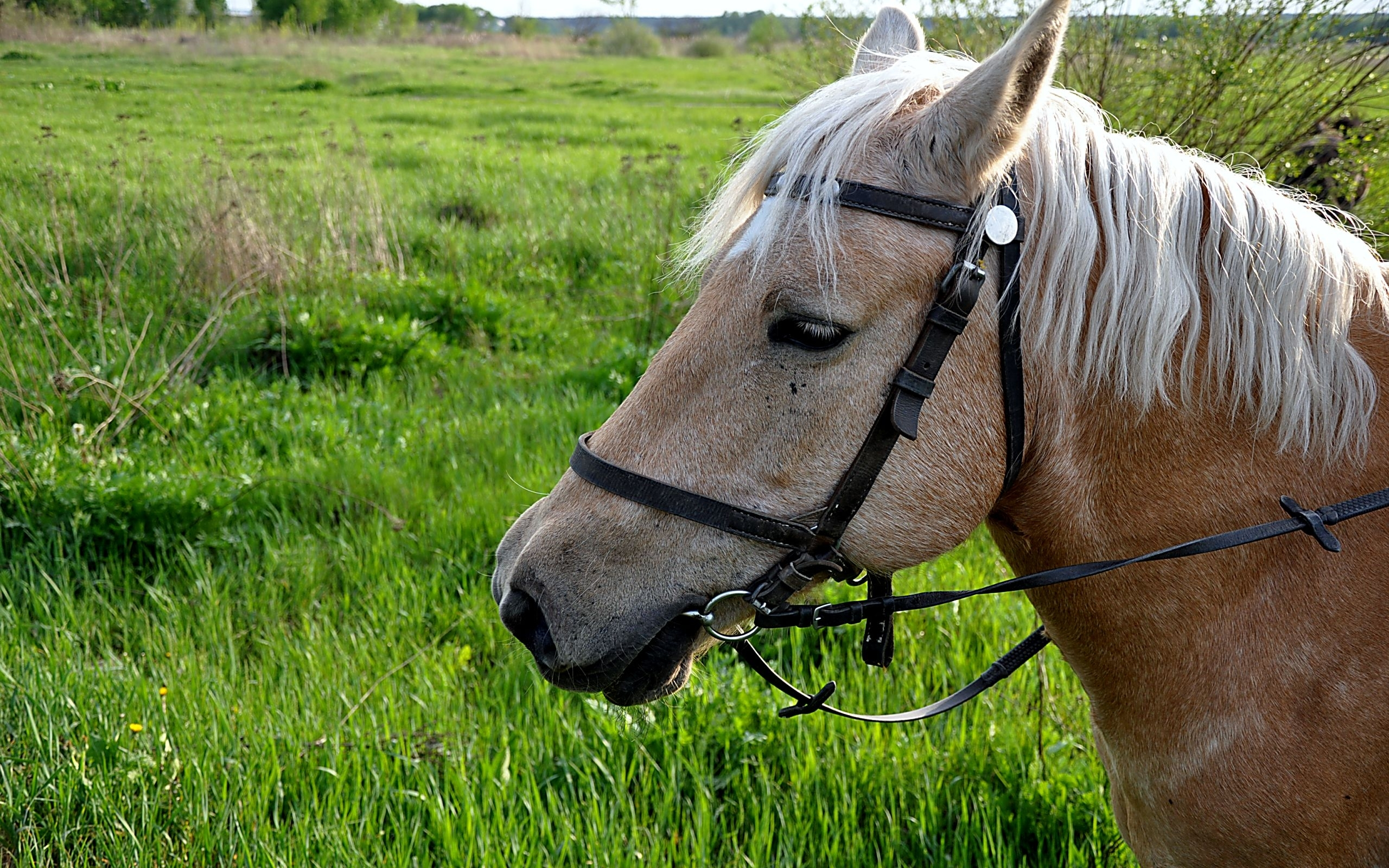 45391 download wallpaper Animals, Horses screensavers and pictures for free