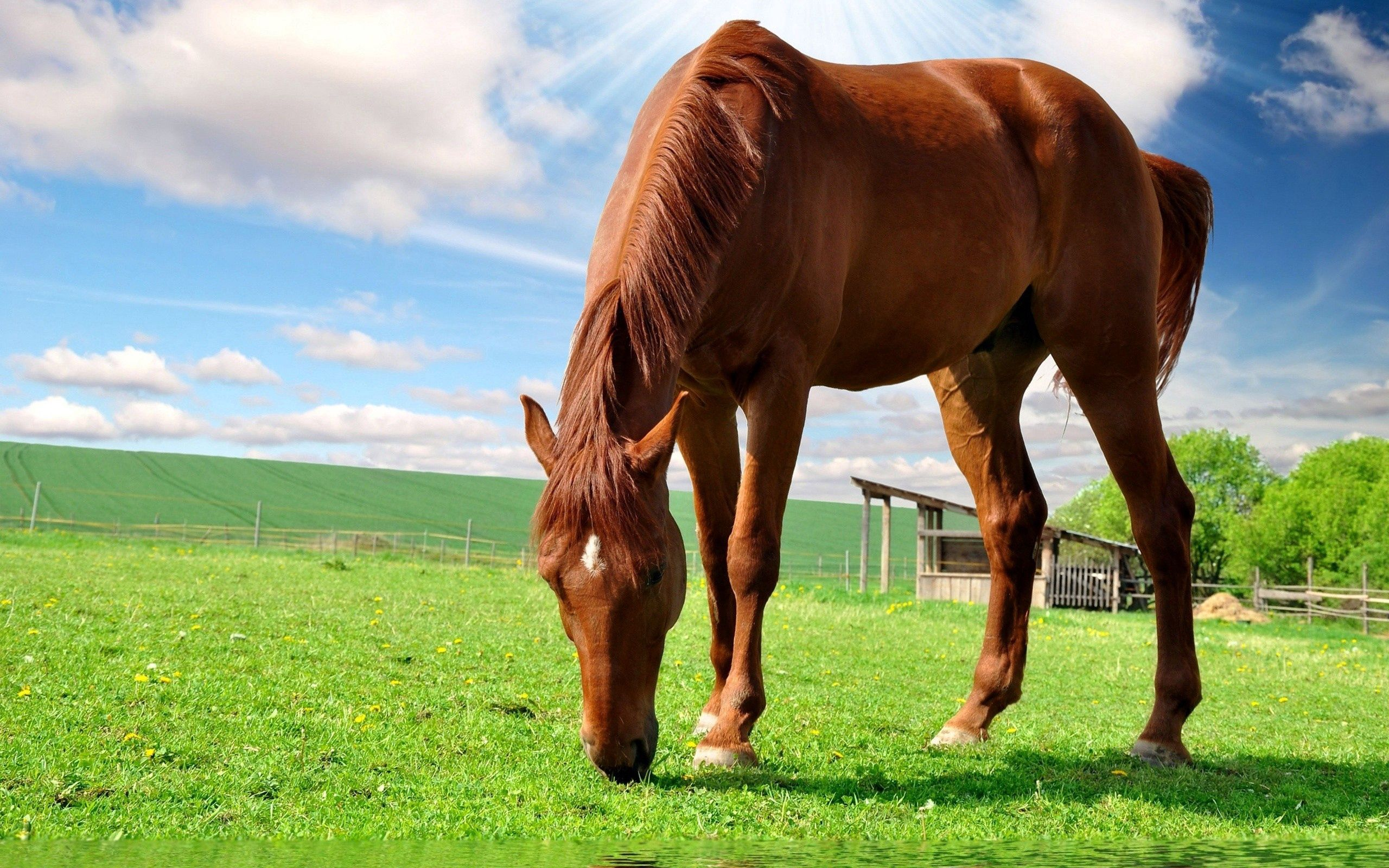 54074 Screensavers and Wallpapers Stroll for phone. Download Animals, Nature, Food, Grass, Sky, Summer, Field, Stroll, Horse pictures for free