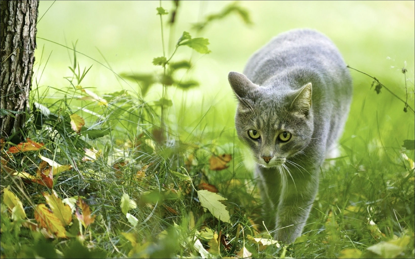 49001 download wallpaper Animals, Cats screensavers and pictures for free