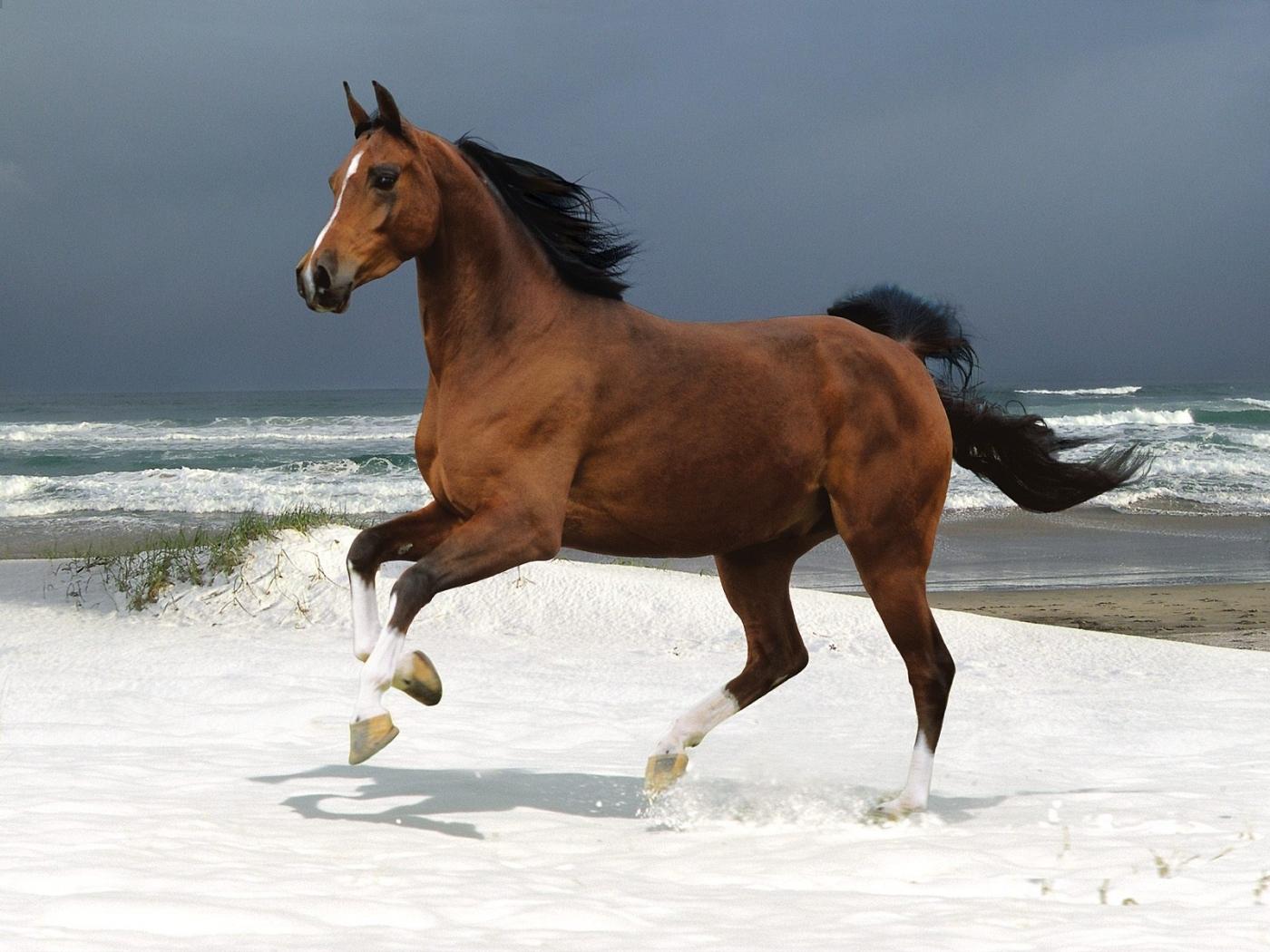 45733 скачать обои Животные, Лошади - заставки и картинки бесплатно