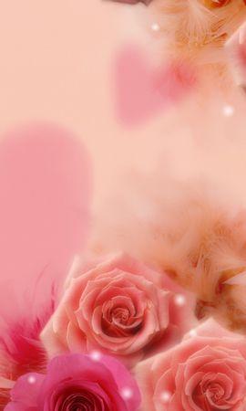 5899 télécharger le fond d'écran Plantes, Fleurs, Roses - économiseurs d'écran et images gratuitement