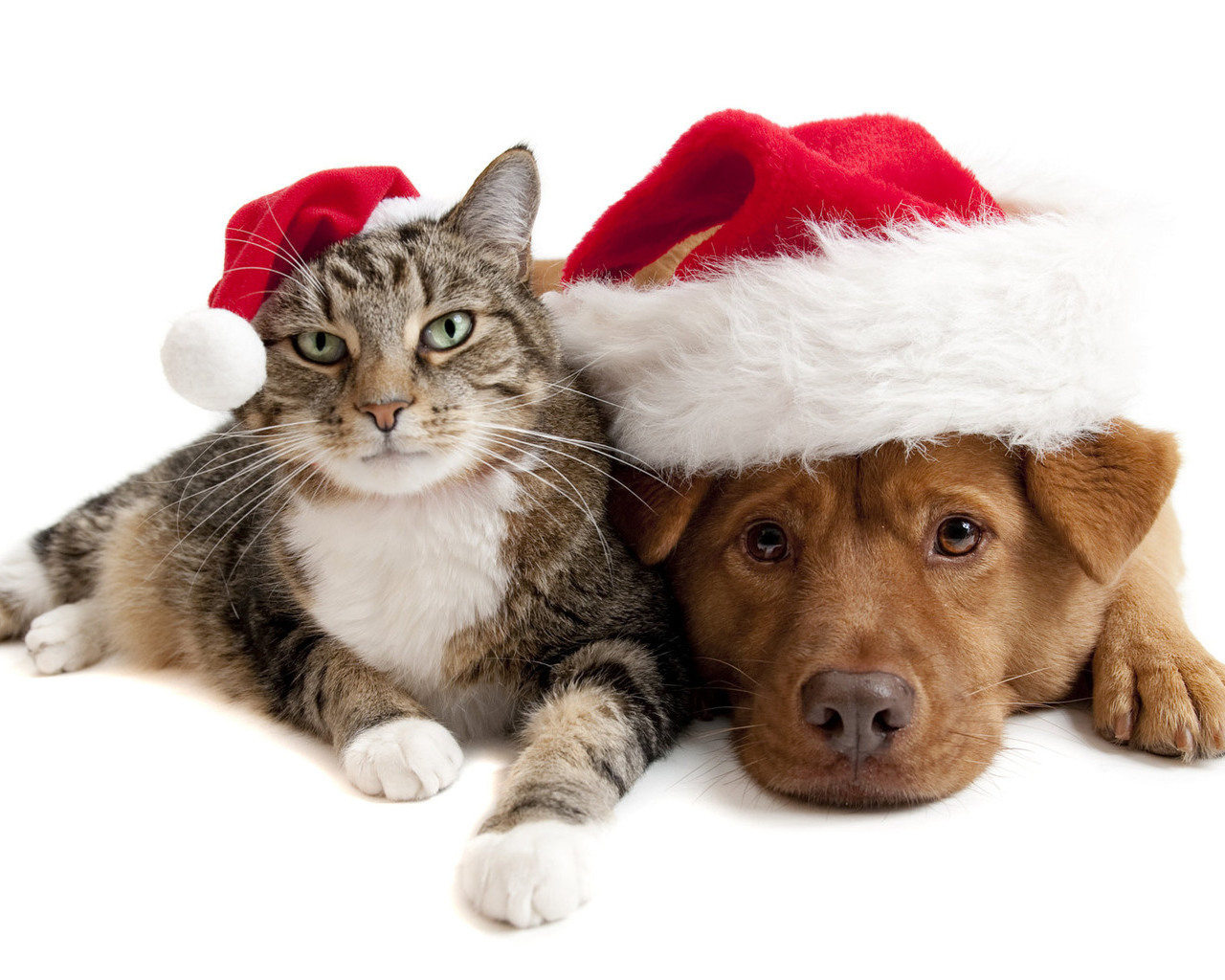 13866 download wallpaper Holidays, Animals, Cats, Dogs, New Year, Christmas, Xmas screensavers and pictures for free
