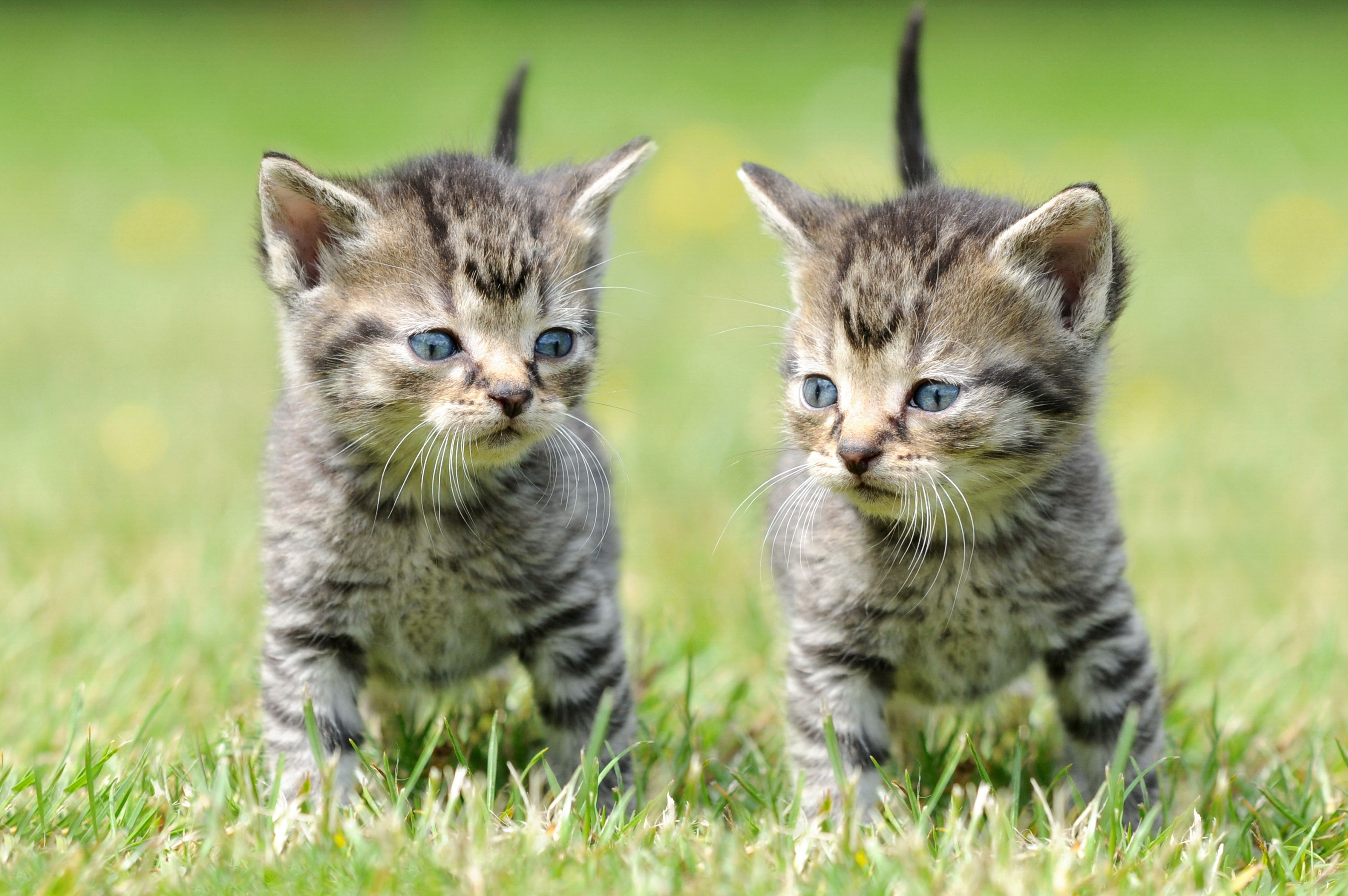 110870 Screensavers and Wallpapers Kittens for phone. Download Animals, Grass, Kittens, Copies pictures for free