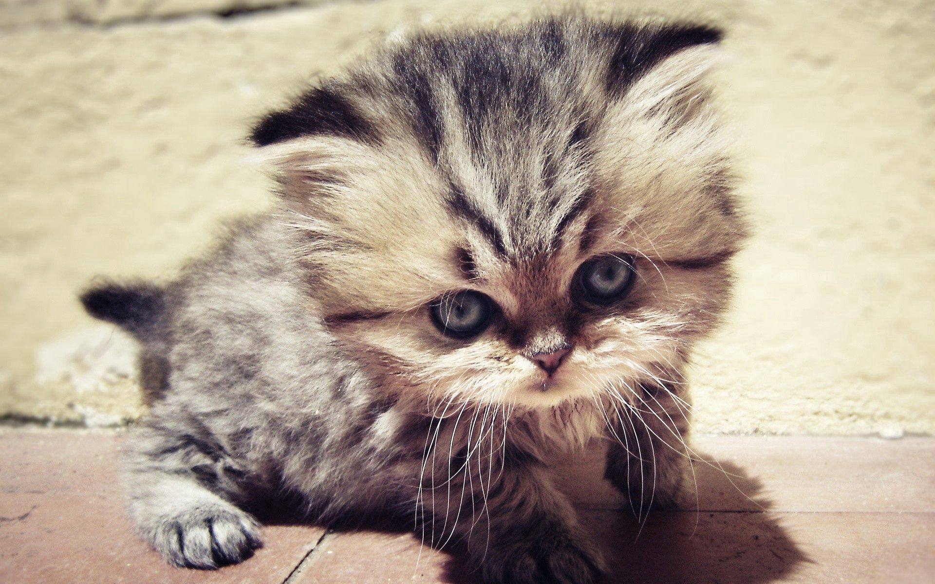 133766 download wallpaper Animals, Kitty, Kitten, Fluffy, Muzzle, Nice, Sweetheart, Sight, Opinion screensavers and pictures for free