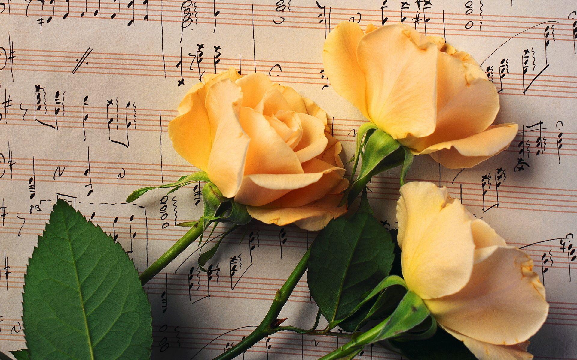 156975 Hintergrundbild herunterladen Musik, Blumen, Roses, Knospen, Drei, Anmerkungen - Bildschirmschoner und Bilder kostenlos