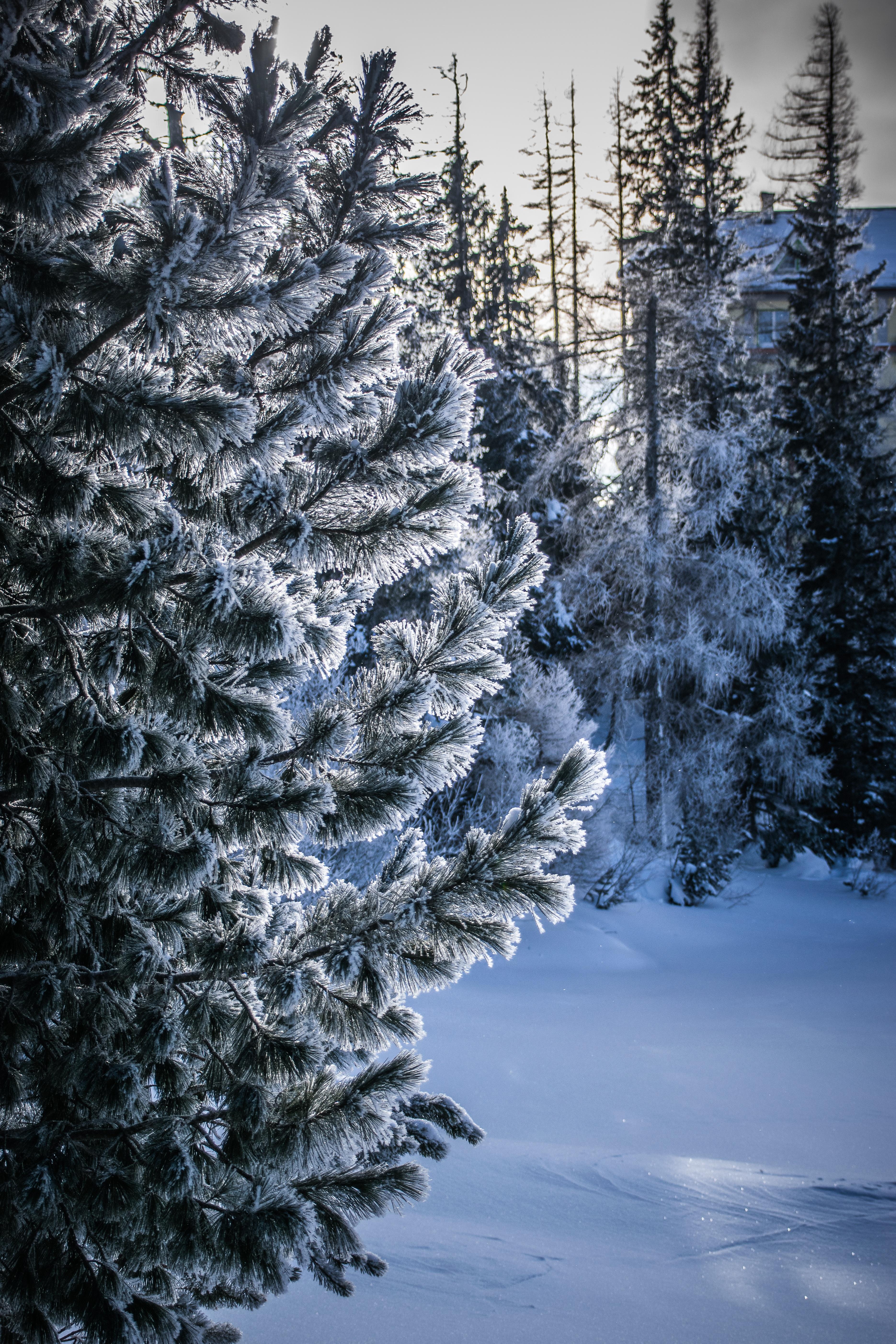 127123 скачать обои Зима, Природа, Снег, Дерево, Иней, Мороз, Заснеженный - заставки и картинки бесплатно