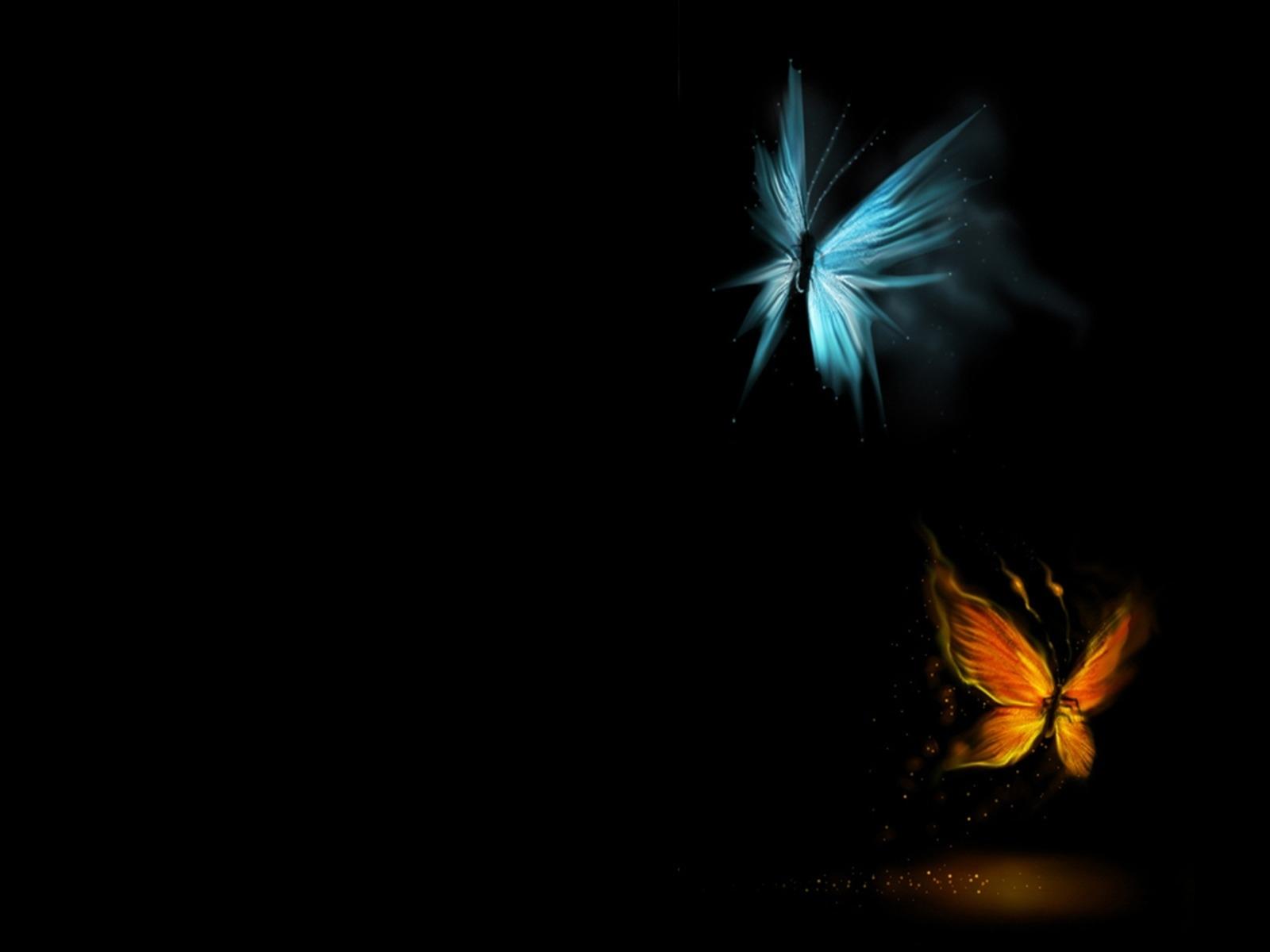 1636 descargar fondo de pantalla Mariposas, Insectos, Imágenes: protectores de pantalla e imágenes gratis