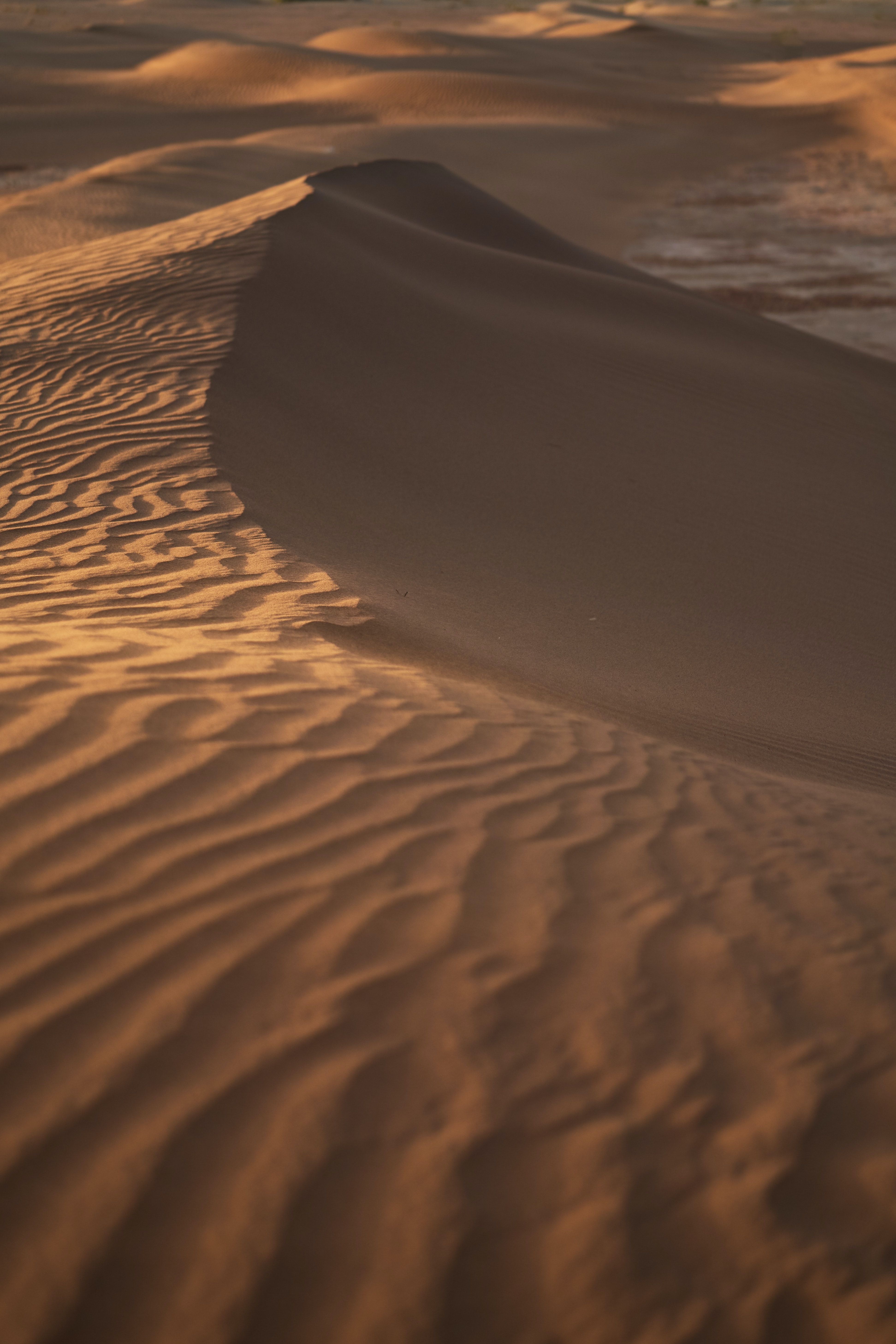 156537 download wallpaper Nature, Sand, Dunes, Links, Wavy, Desert screensavers and pictures for free