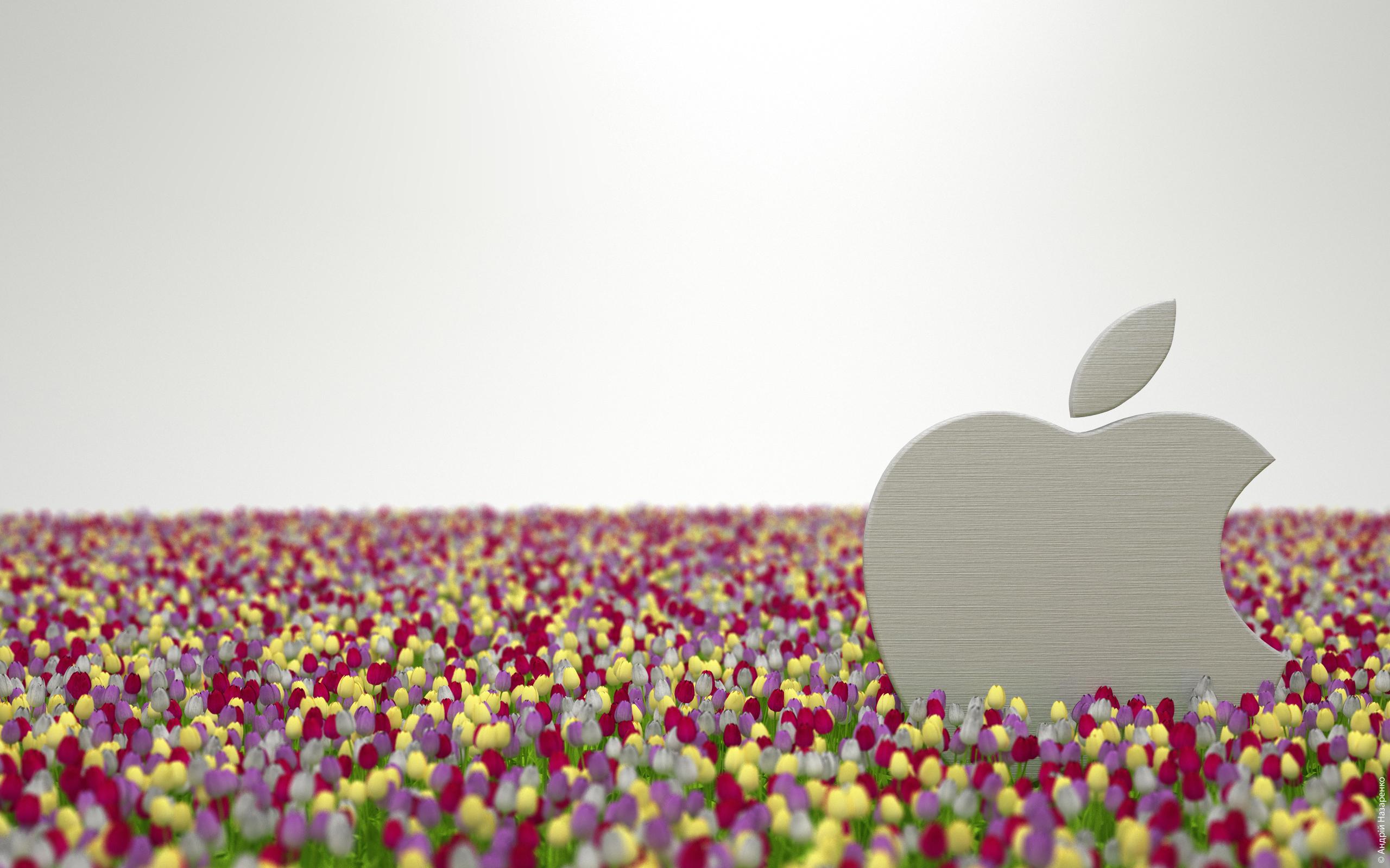 Handy-Wallpaper Pflanzen, Marken, Blumen, Logos, Apple- kostenlos herunterladen.