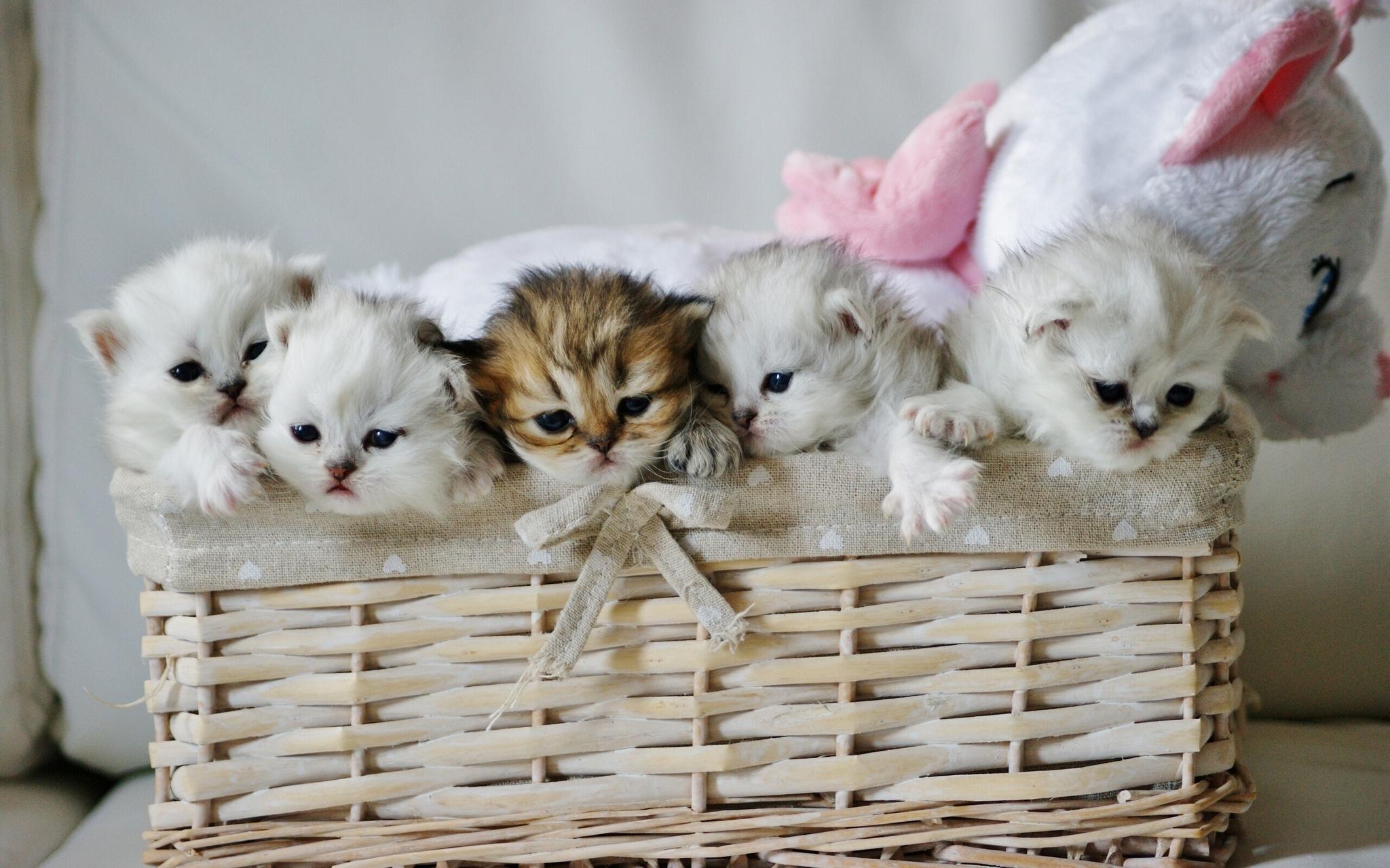 84108 Hintergrundbild herunterladen Tiere, Spielzeug, Kätzchen, Süß, Korb, Niedlich - Bildschirmschoner und Bilder kostenlos