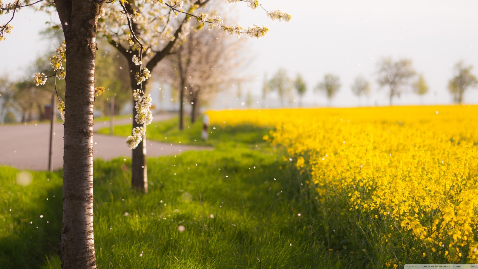17998 download wallpaper Landscape, Flowers, Trees, Fields screensavers and pictures for free