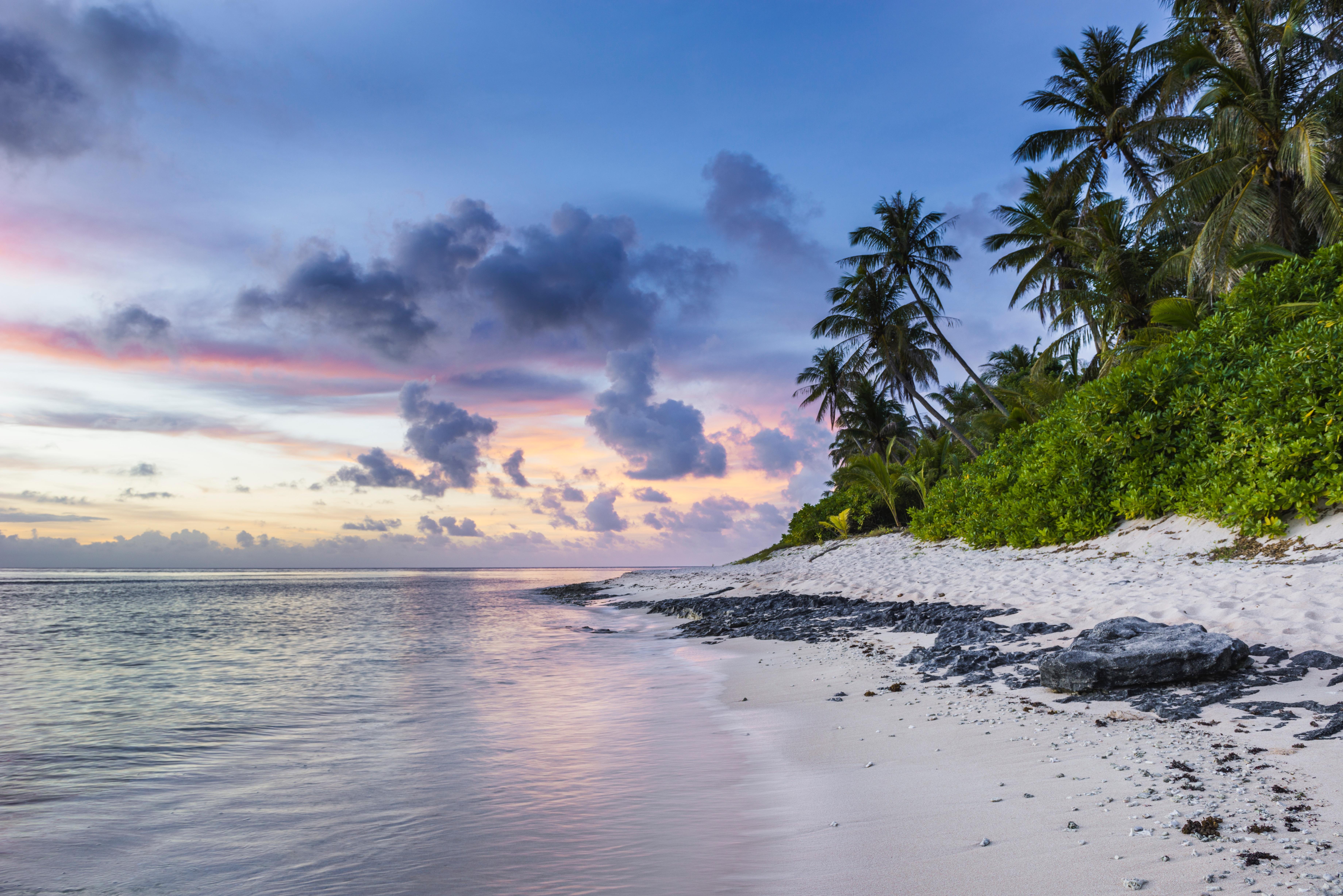 66886 免費下載壁紙 性质, 海滩, 沙, 海洋, 棕榈 屏保和圖片
