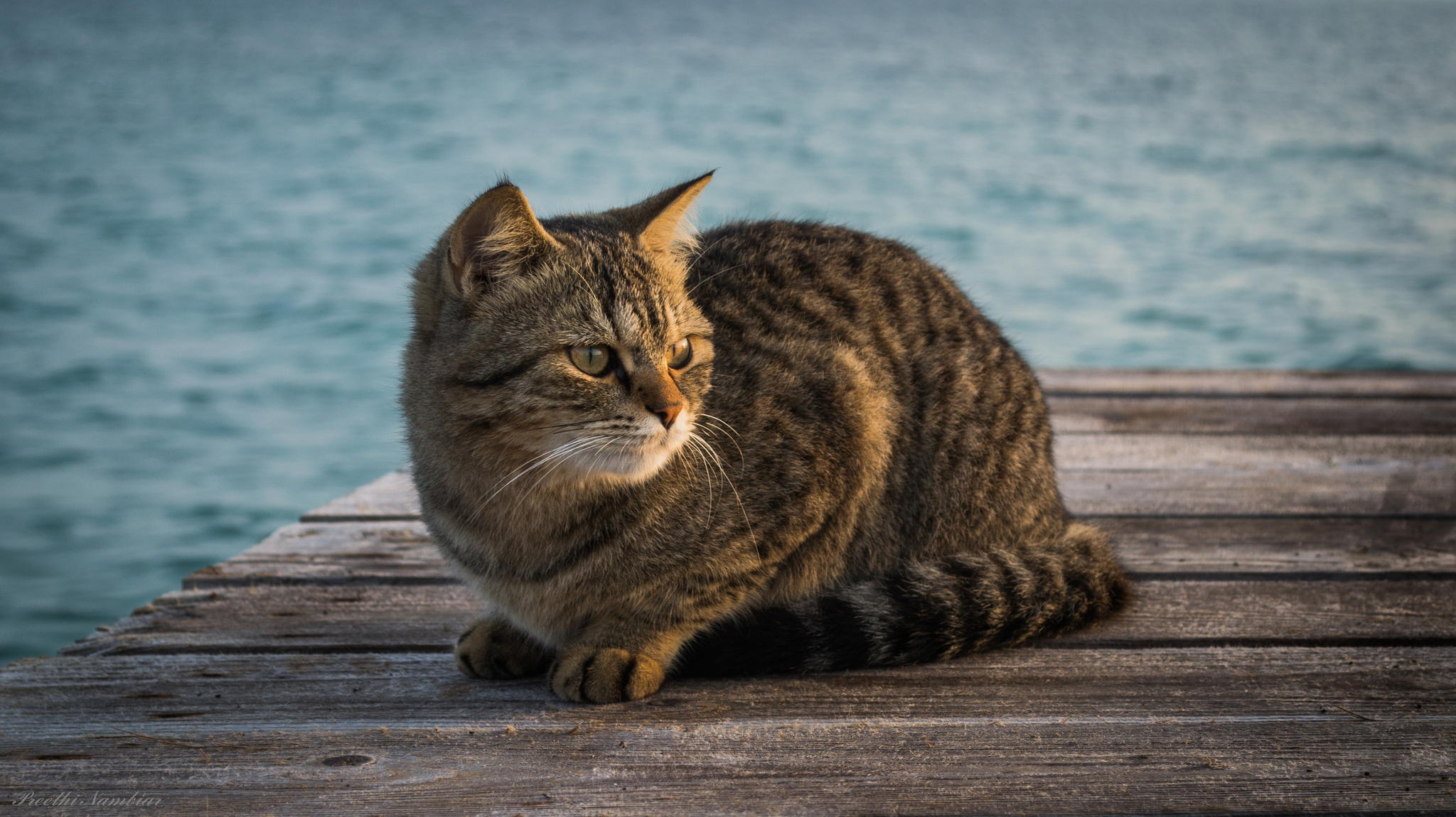 99497 Screensavers and Wallpapers Sit for phone. Download Animals, Sit, Cat, Striped, Wharf, Berth pictures for free