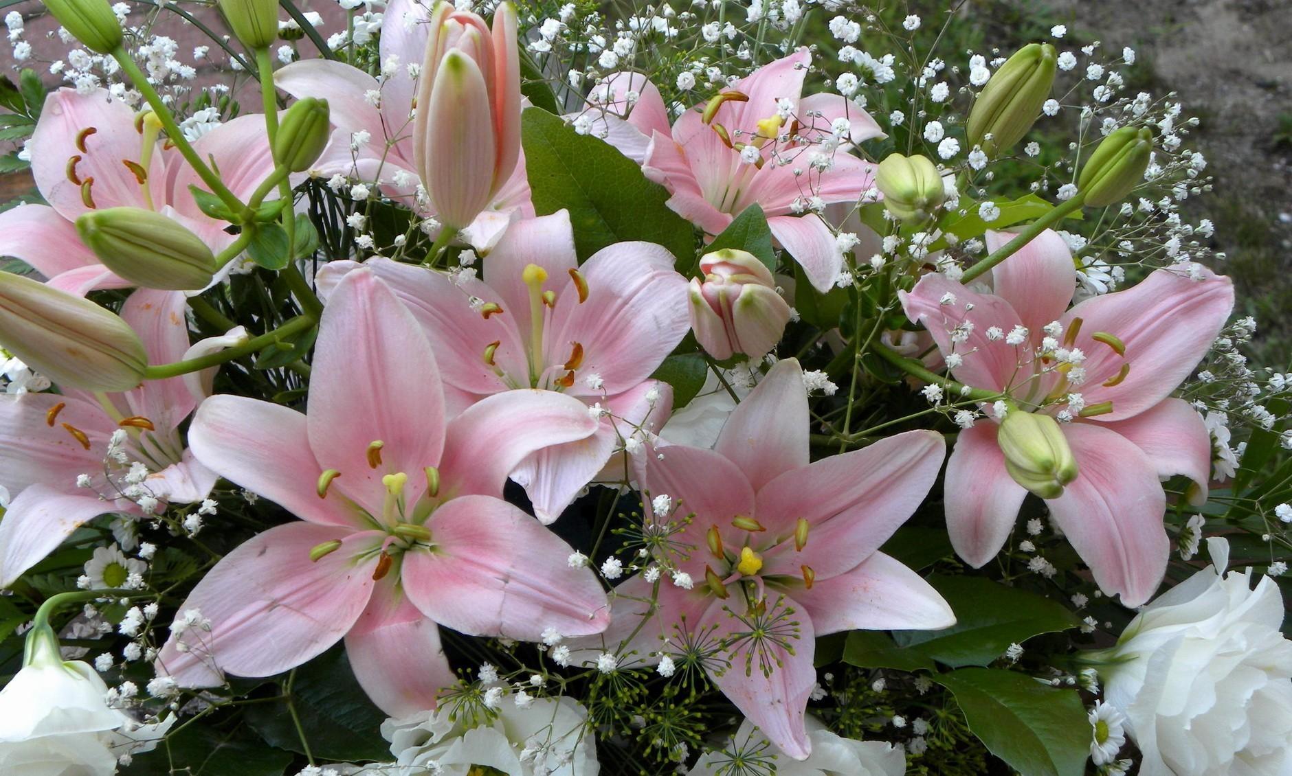 101804 télécharger le fond d'écran Fleurs, Lilies, Gypsophile, Gipsophile, Bouquet, Bourgeons - économiseurs d'écran et images gratuitement