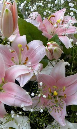 101804 скачать обои Цветы, Лилии, Гипсофил, Букет, Бутоны - заставки и картинки бесплатно
