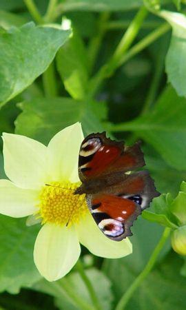 42403 Salvapantallas y fondos de pantalla Insectos en tu teléfono. Descarga imágenes de Mariposas, Insectos gratis