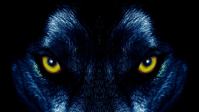 128129 Protetores de tela e papéis de parede Opinião em seu telefone. Baixe Animais, Olhos, Olho, Predator, Predador, Lobo, Visão, Opinião fotos gratuitamente
