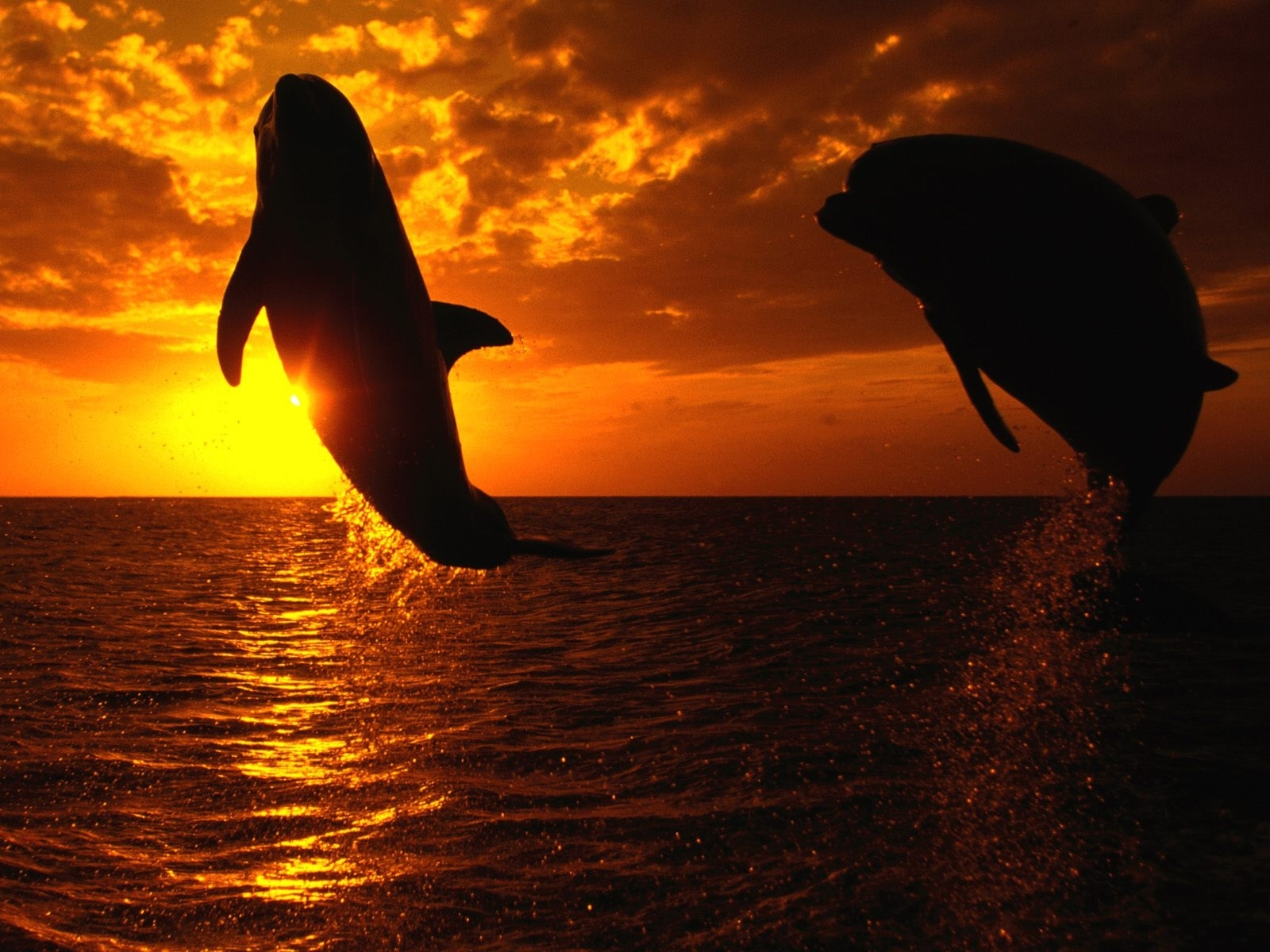 1472 download wallpaper Animals, Landscape, Sunset, Dolfins, Sea, Sun screensavers and pictures for free