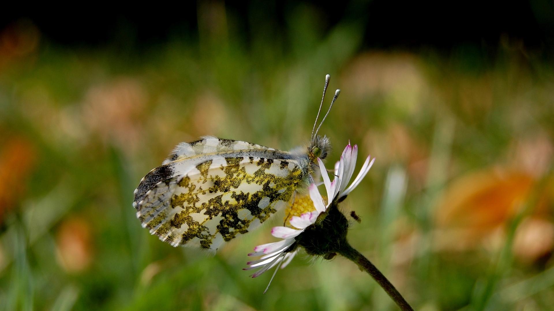 3358 скачать обои Бабочки, Насекомые - заставки и картинки бесплатно
