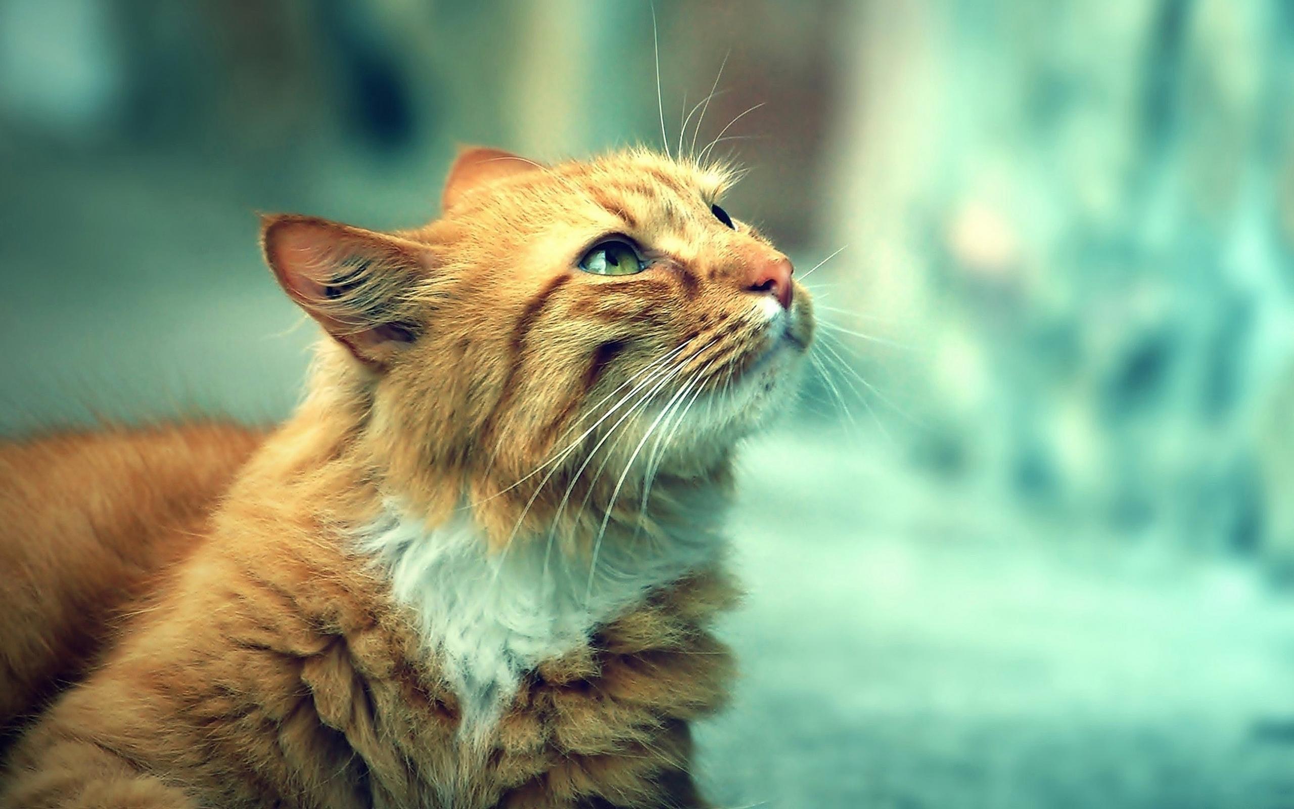 24136 скачать обои Животные, Кошки (Коты, Котики) - заставки и картинки бесплатно