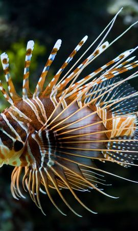 3865 download wallpaper Animals, Fishes screensavers and pictures for free