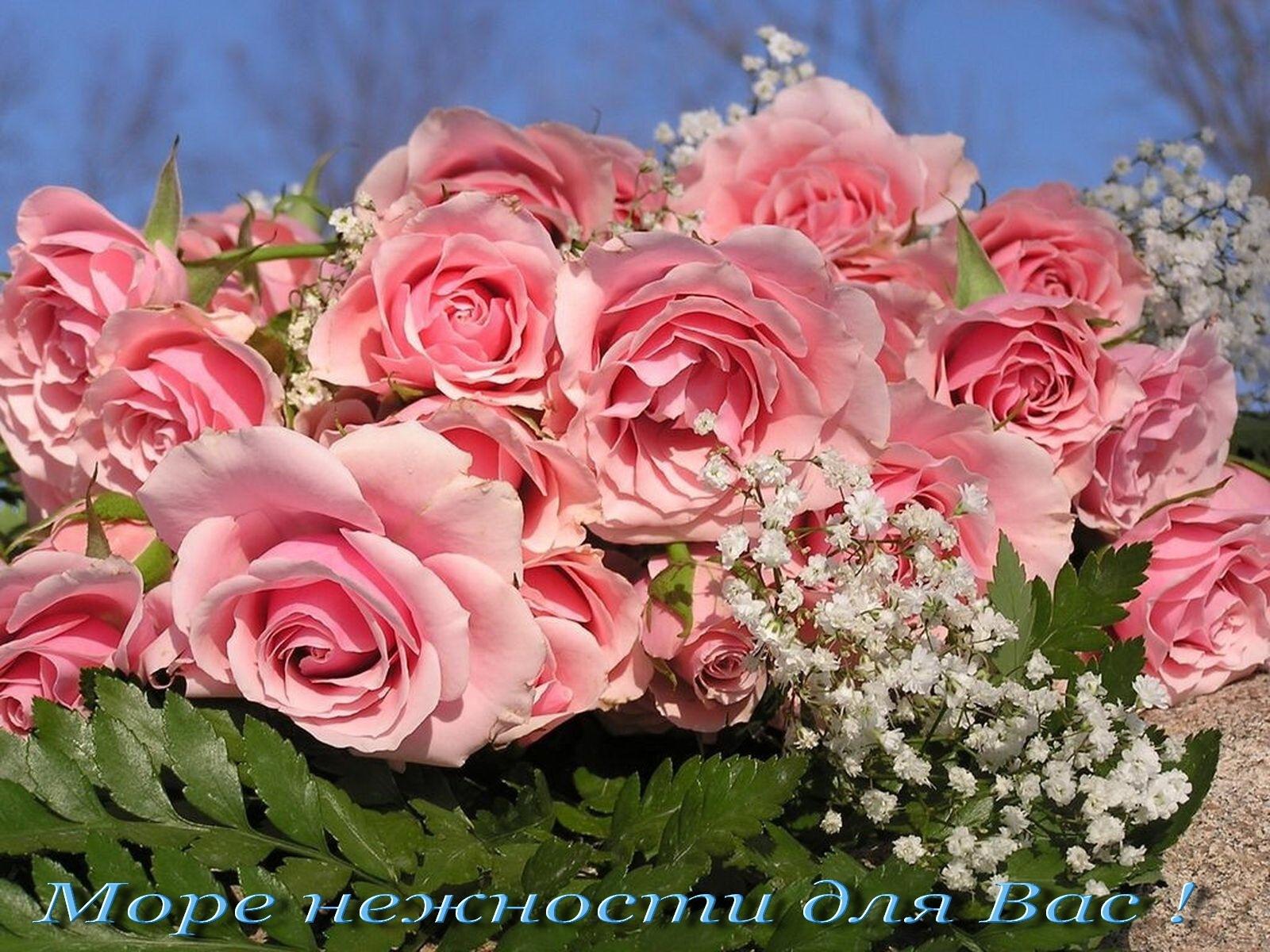1340 скачать обои Праздники, Растения, Цветы, Розы - заставки и картинки бесплатно