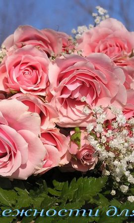 1340 download wallpaper Holidays, Plants, Flowers, Roses screensavers and pictures for free
