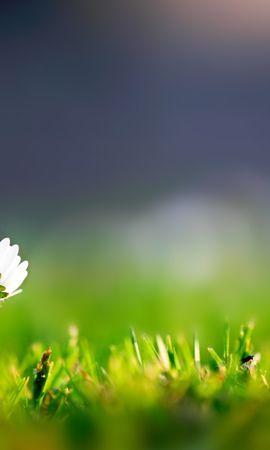 25655 скачать обои Растения, Цветы, Трава - заставки и картинки бесплатно