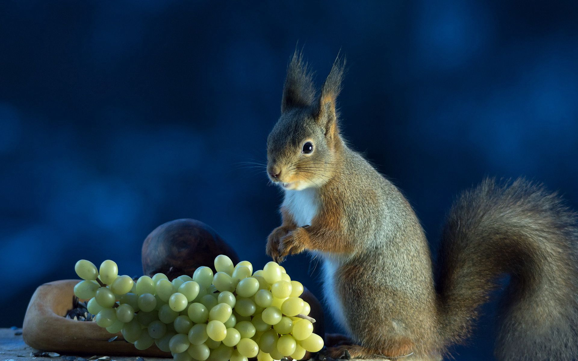 102812 download wallpaper Animals, Squirrel, Food, Grapes screensavers and pictures for free