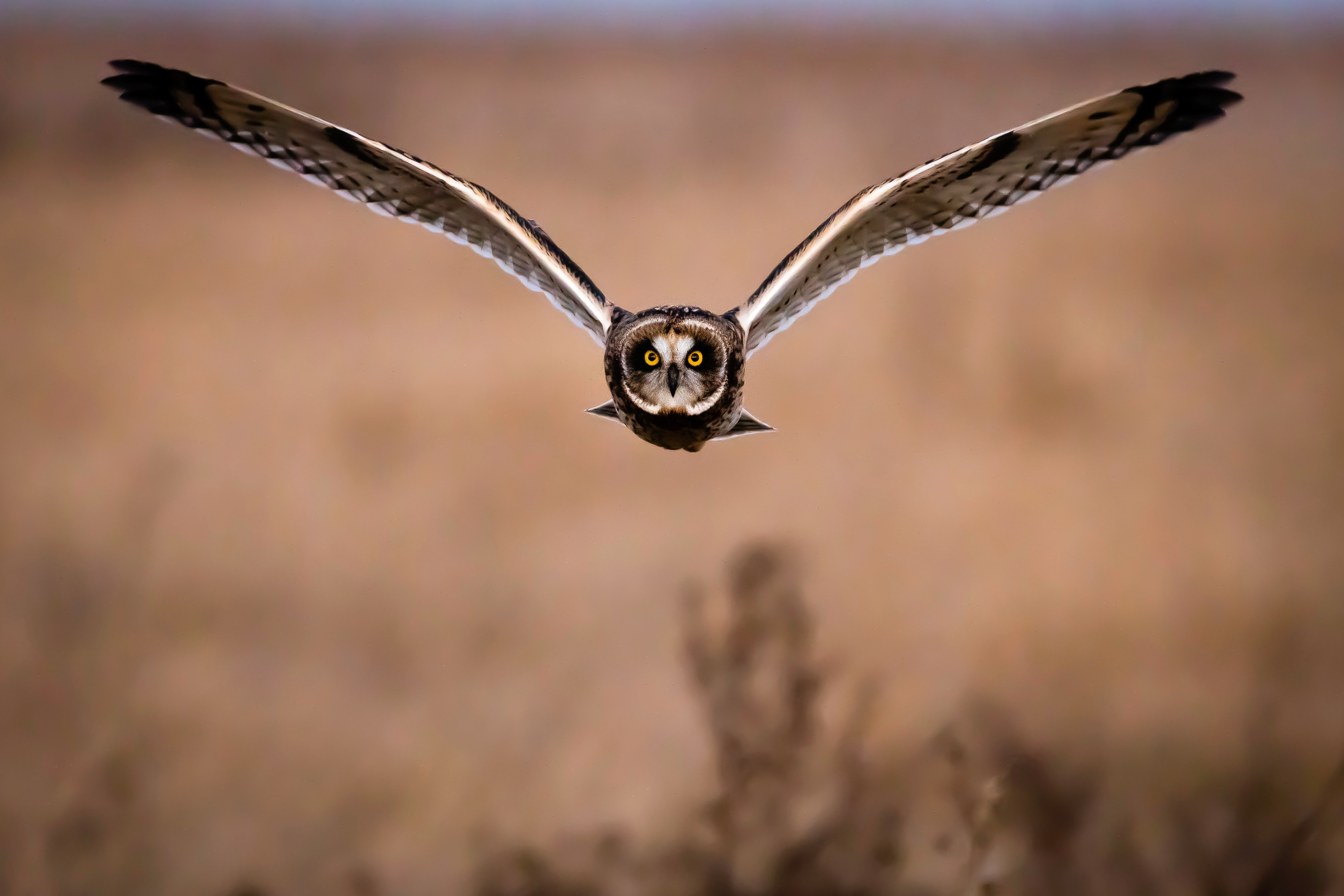 105367 download wallpaper Animals, Owl, Bird, Flight, Wings, Predator screensavers and pictures for free