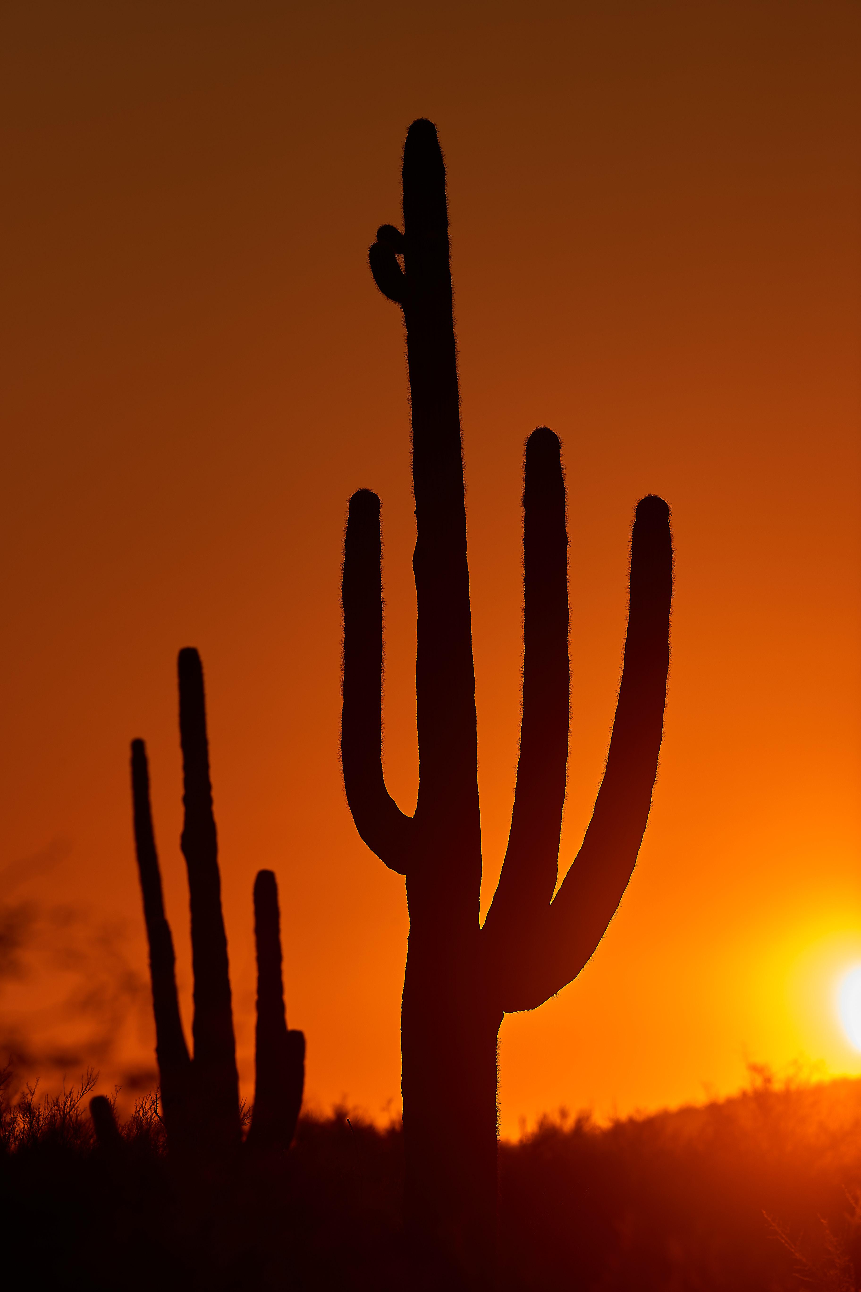 113712 Заставки и Обои Кактусы на телефон. Скачать Природа, Кактусы, Закат, Темный, Сумерки картинки бесплатно