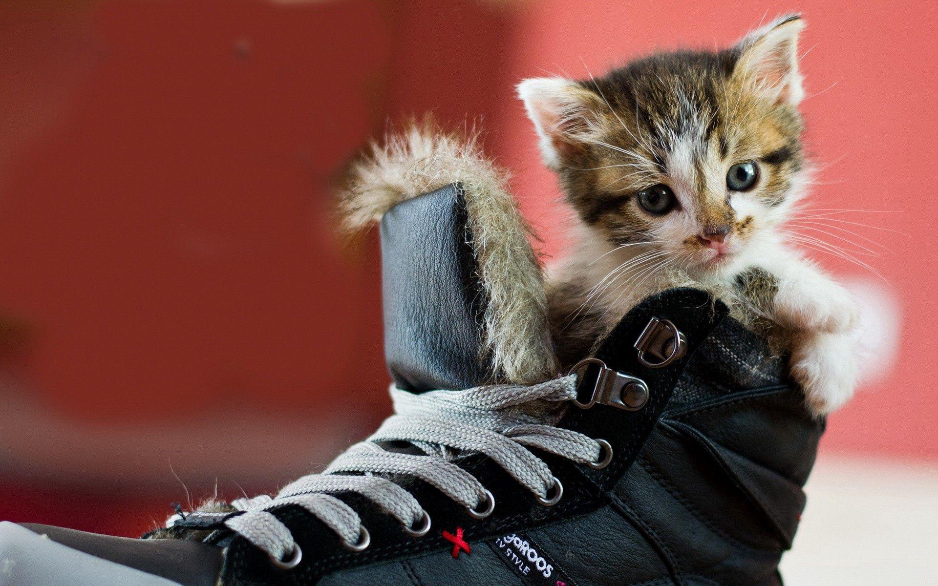 99370 Hintergrundbild herunterladen Tiere, Kätzchen, Gefleckt, Fleckig, Schuhe, Schuhwerk - Bildschirmschoner und Bilder kostenlos
