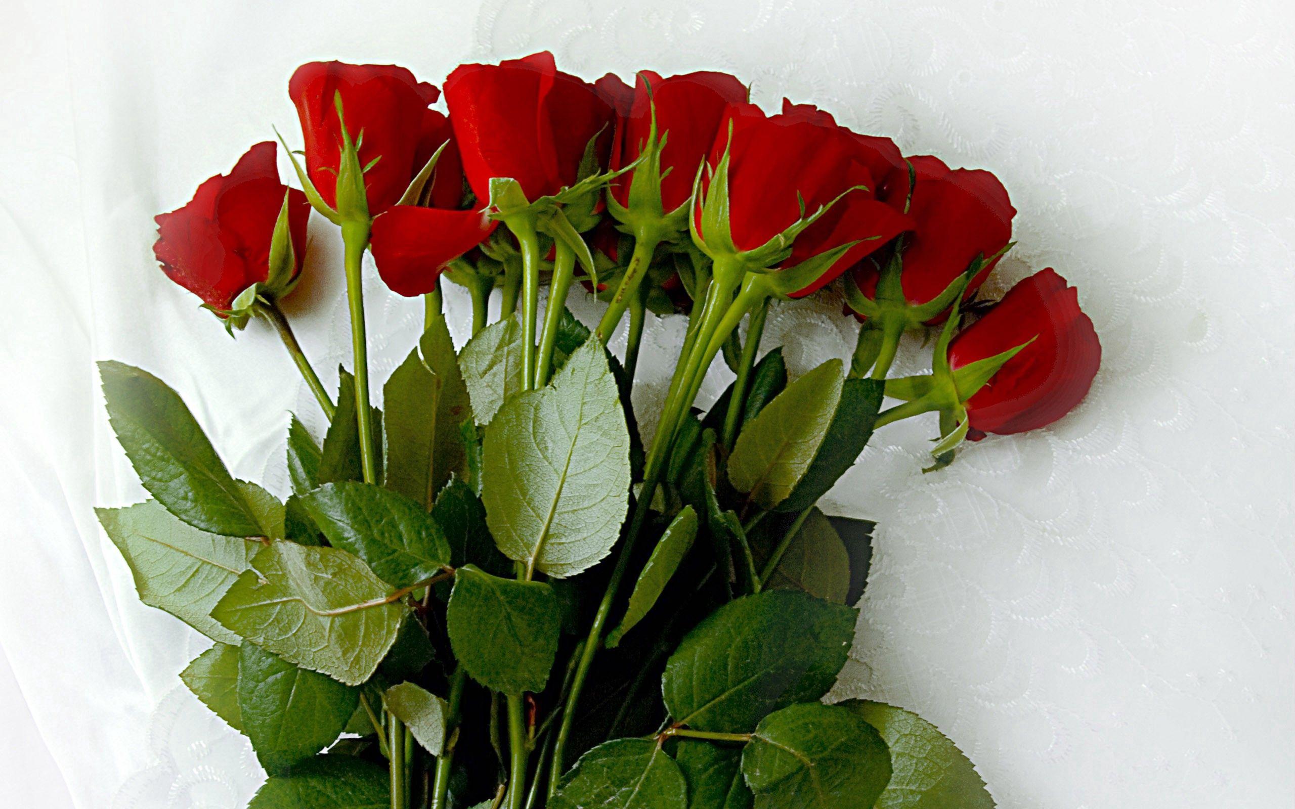 97136 скачать обои Розы, Цветы, Лежать, Букет, Скатерть - заставки и картинки бесплатно