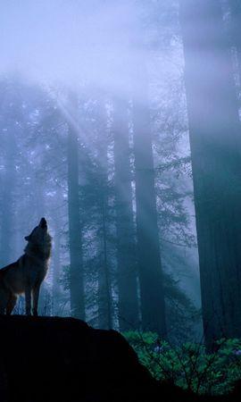 3409 baixar papel de parede Animais, Lobos - protetores de tela e imagens gratuitamente