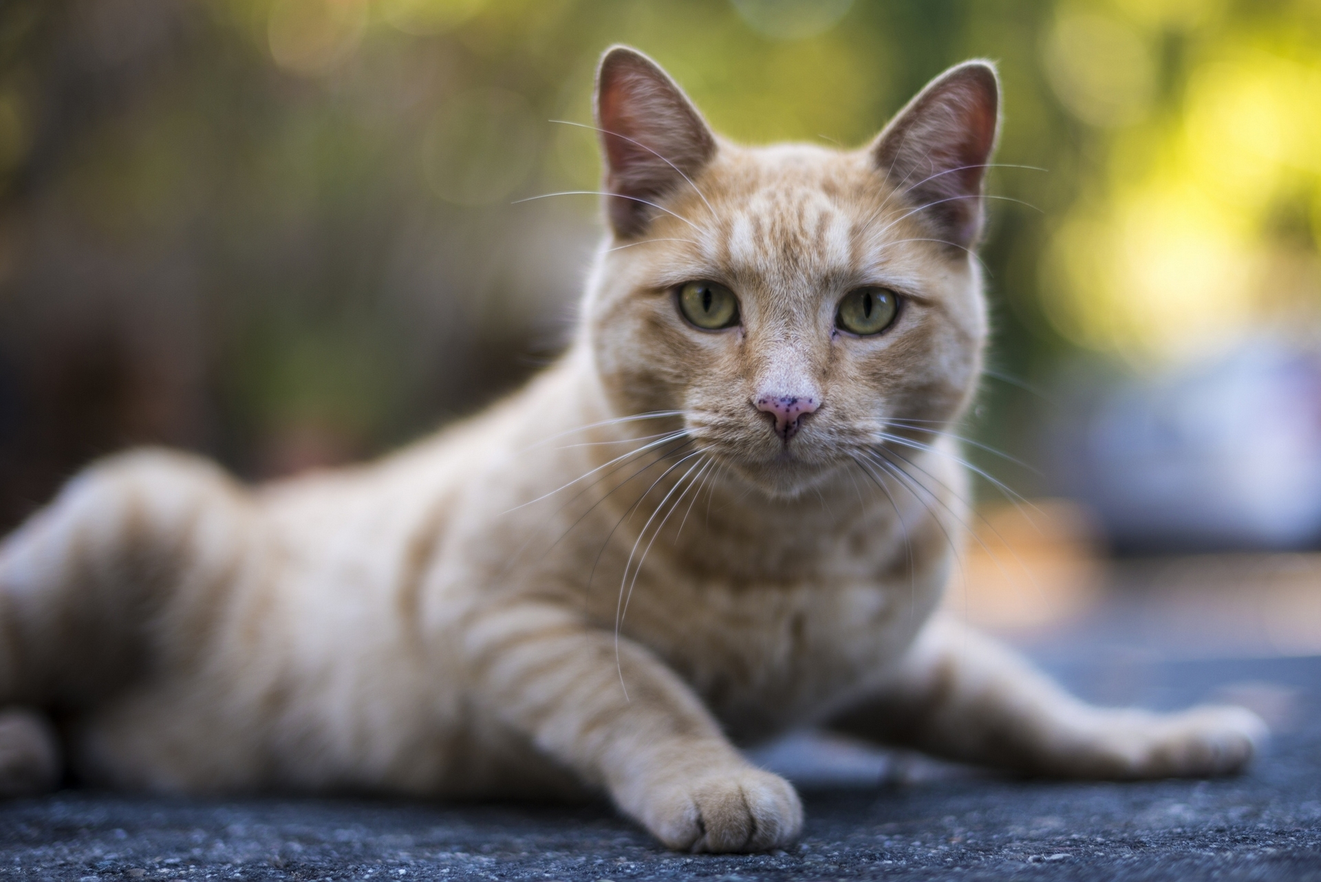 71435 Screensavers and Wallpapers Striped for phone. Download Animals, Cat, Muzzle, Striped, Sight, Opinion pictures for free