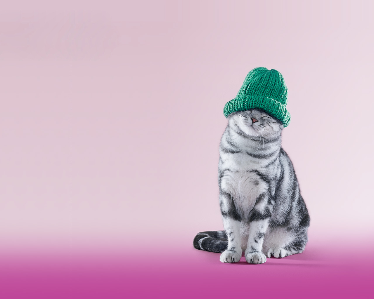 12456 download wallpaper Funny, Animals, People, Cats, Whiskas screensavers and pictures for free