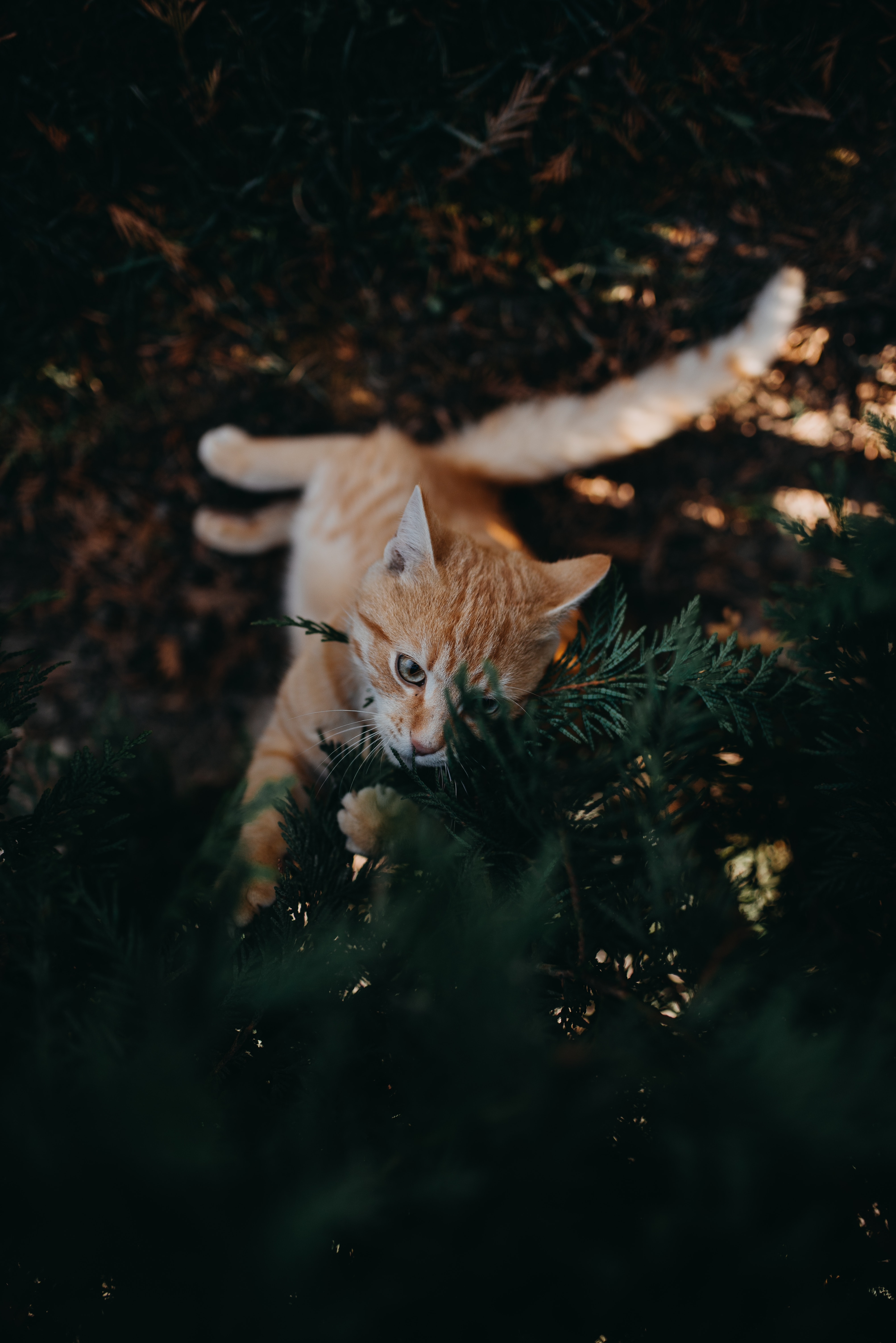 143590 download wallpaper Animals, Cat, Branch, Nice, Sweetheart, Playful, Pet screensavers and pictures for free