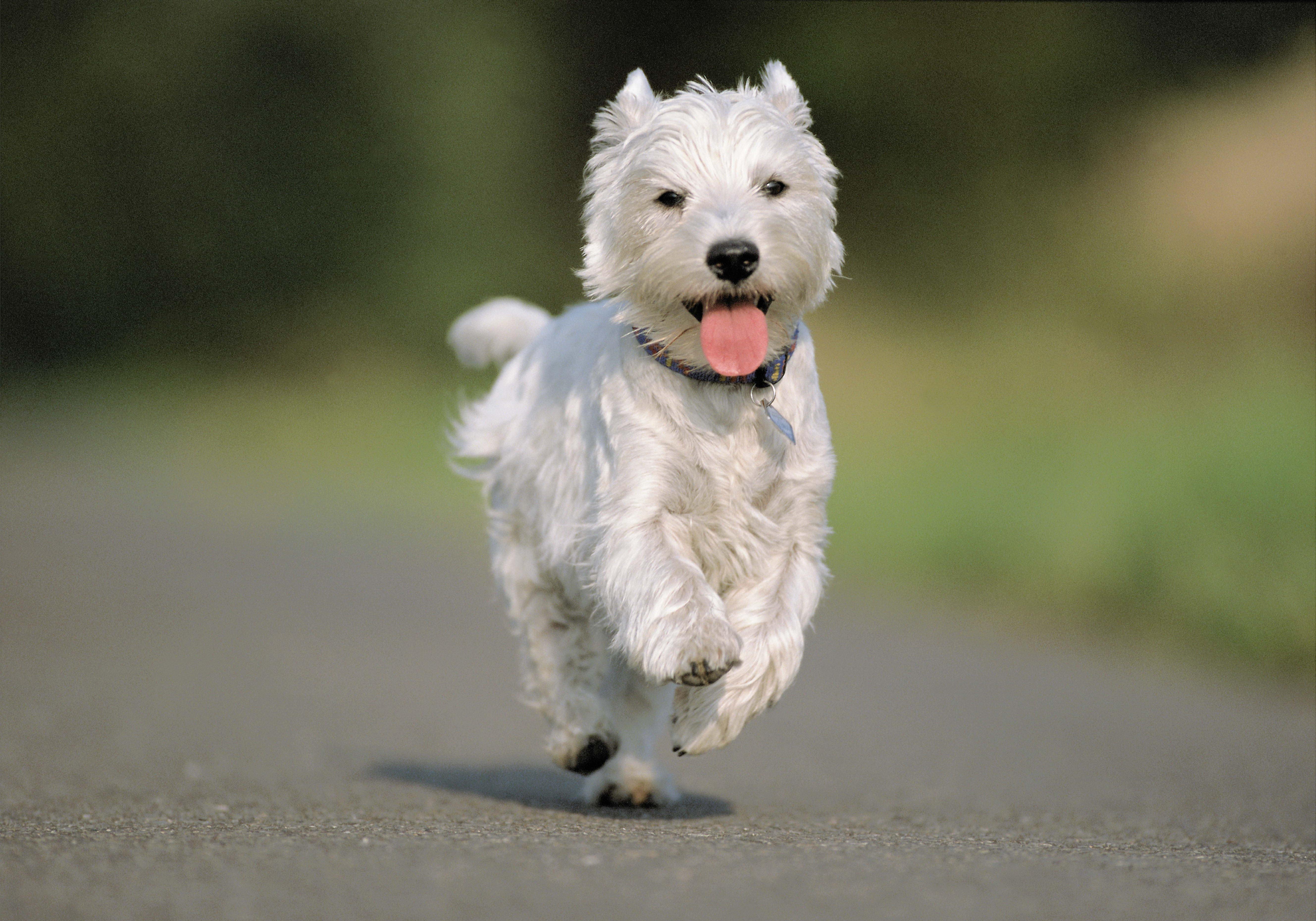 127211 скачать обои Животные, Собака, Бег, Асфальт, Дорога - заставки и картинки бесплатно