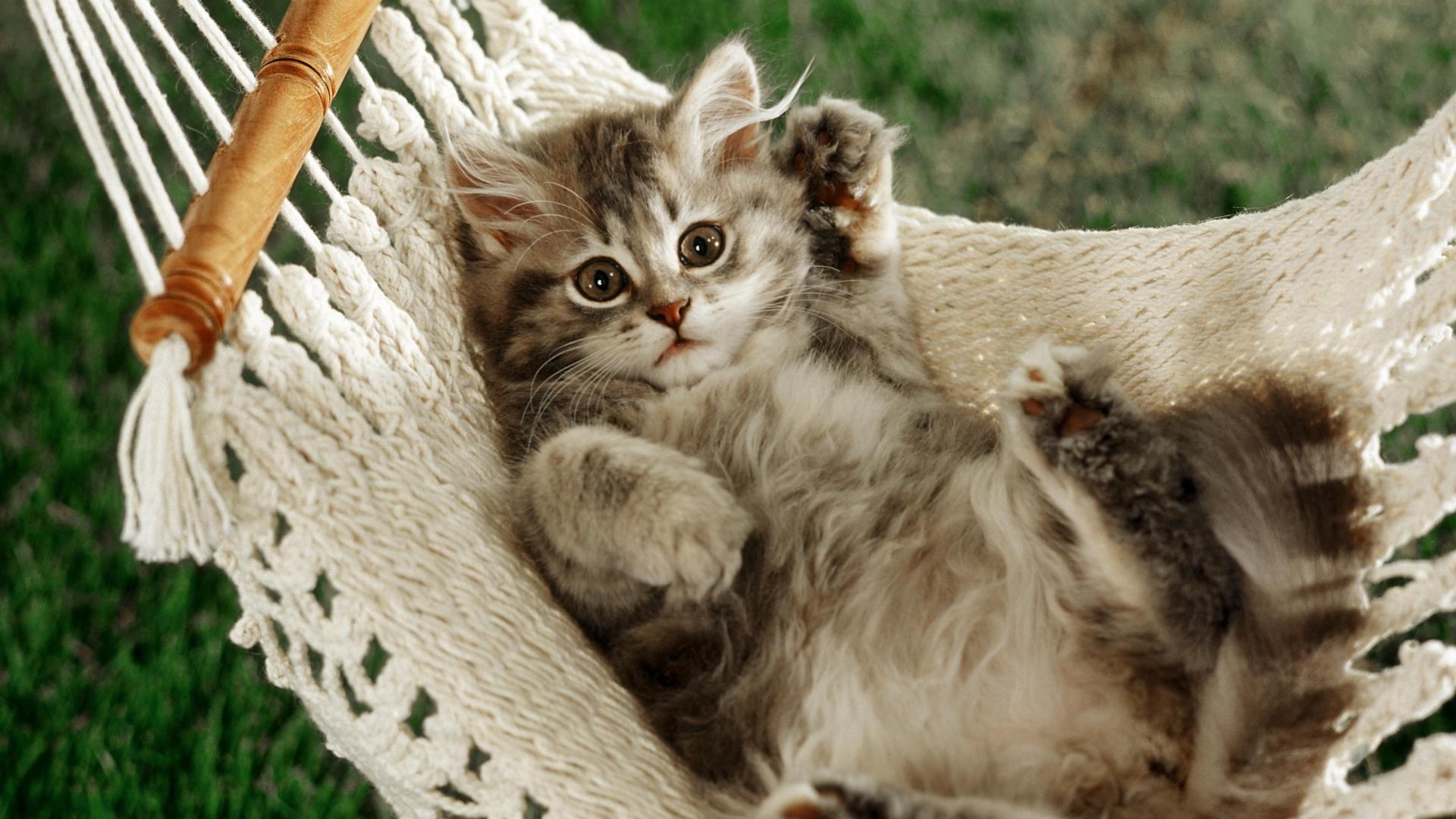 1278 скачать обои Кошки (Коты, Котики), Животные - заставки и картинки бесплатно