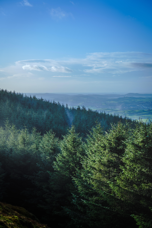 114347 скачать обои Природа, Лес, Деревья, Горизонт, Горы, Пейзаж, Елки - заставки и картинки бесплатно