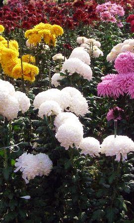 8125 скачать обои Растения, Цветы - заставки и картинки бесплатно