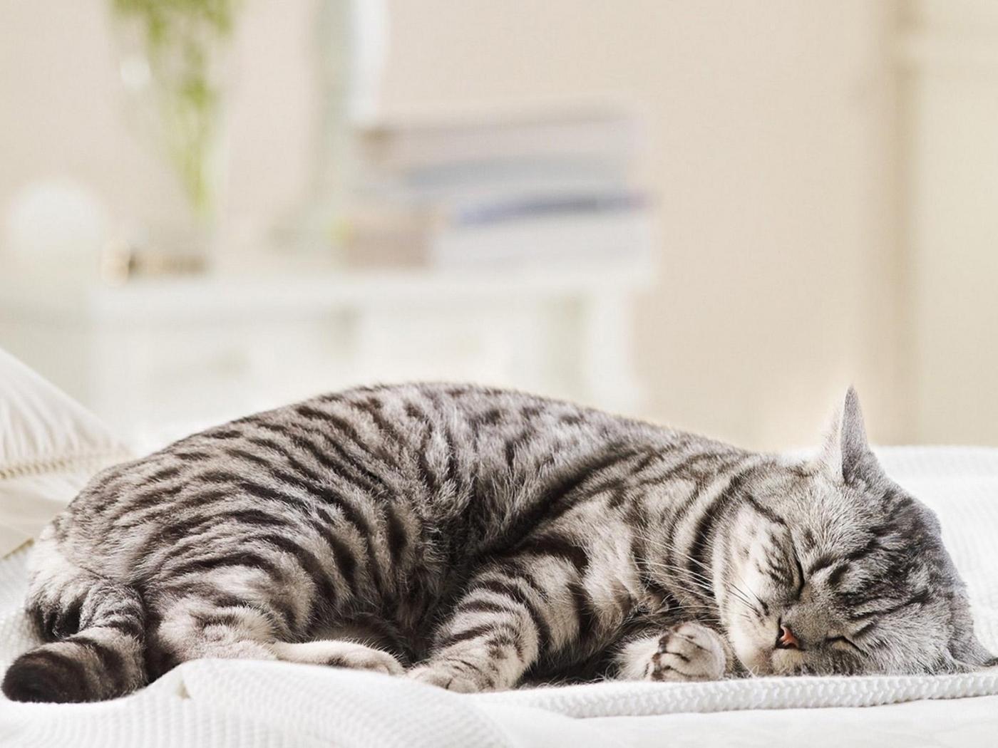 24468 скачать обои Животные, Кошки (Коты, Котики) - заставки и картинки бесплатно