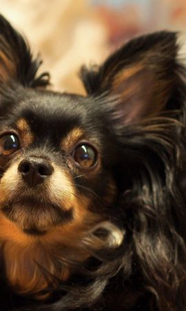 106660 Screensavers and Wallpapers Funny for phone. Download Animals, Dog, Fluffy, Funny, Eyes, Strabismus, Squint pictures for free