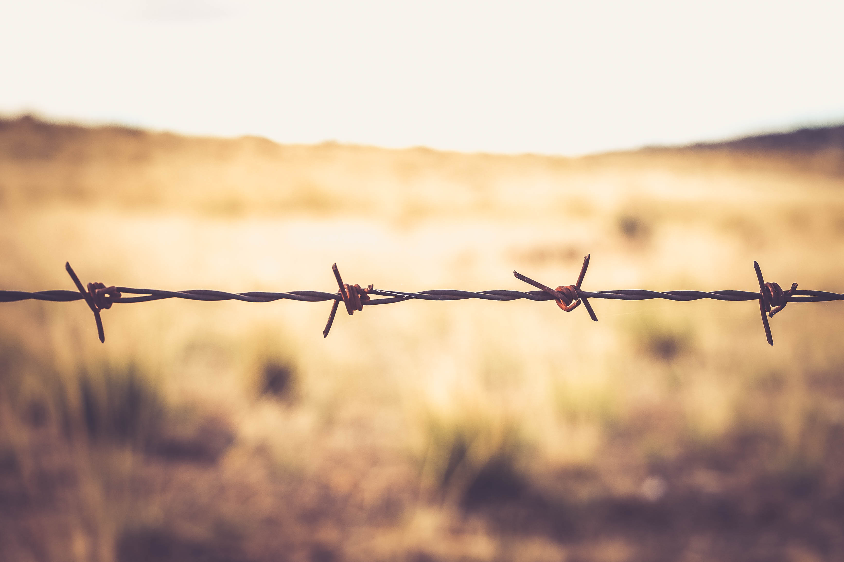 62915 download wallpaper Macro, Barbed, Spiny, Thorns, Spikes, Wire, Barbed Wire screensavers and pictures for free