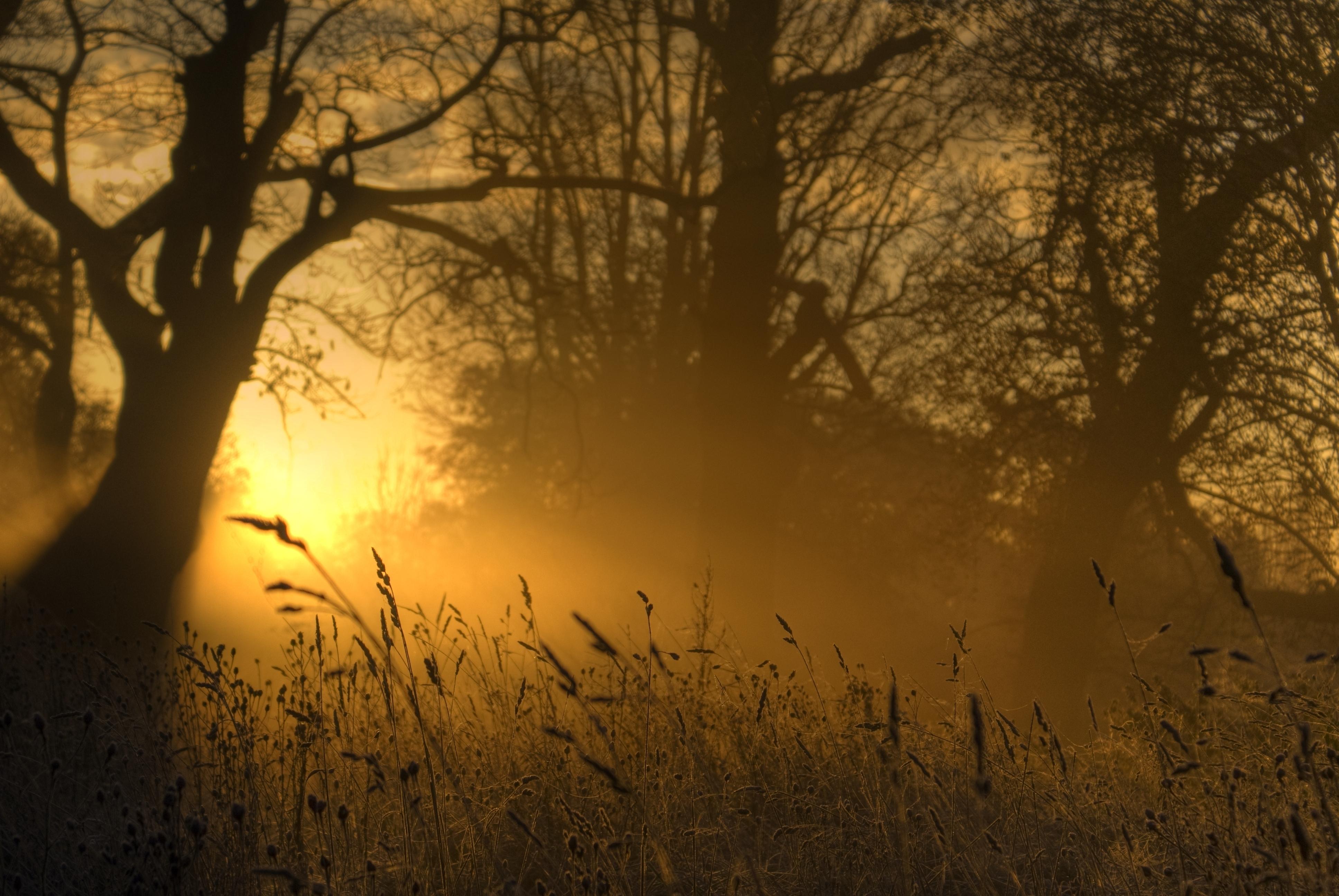95018 Заставки и Обои Солнце на телефон. Скачать Солнце, Природа, Деревья, Свет, Очертания, Колосья, Зарево картинки бесплатно