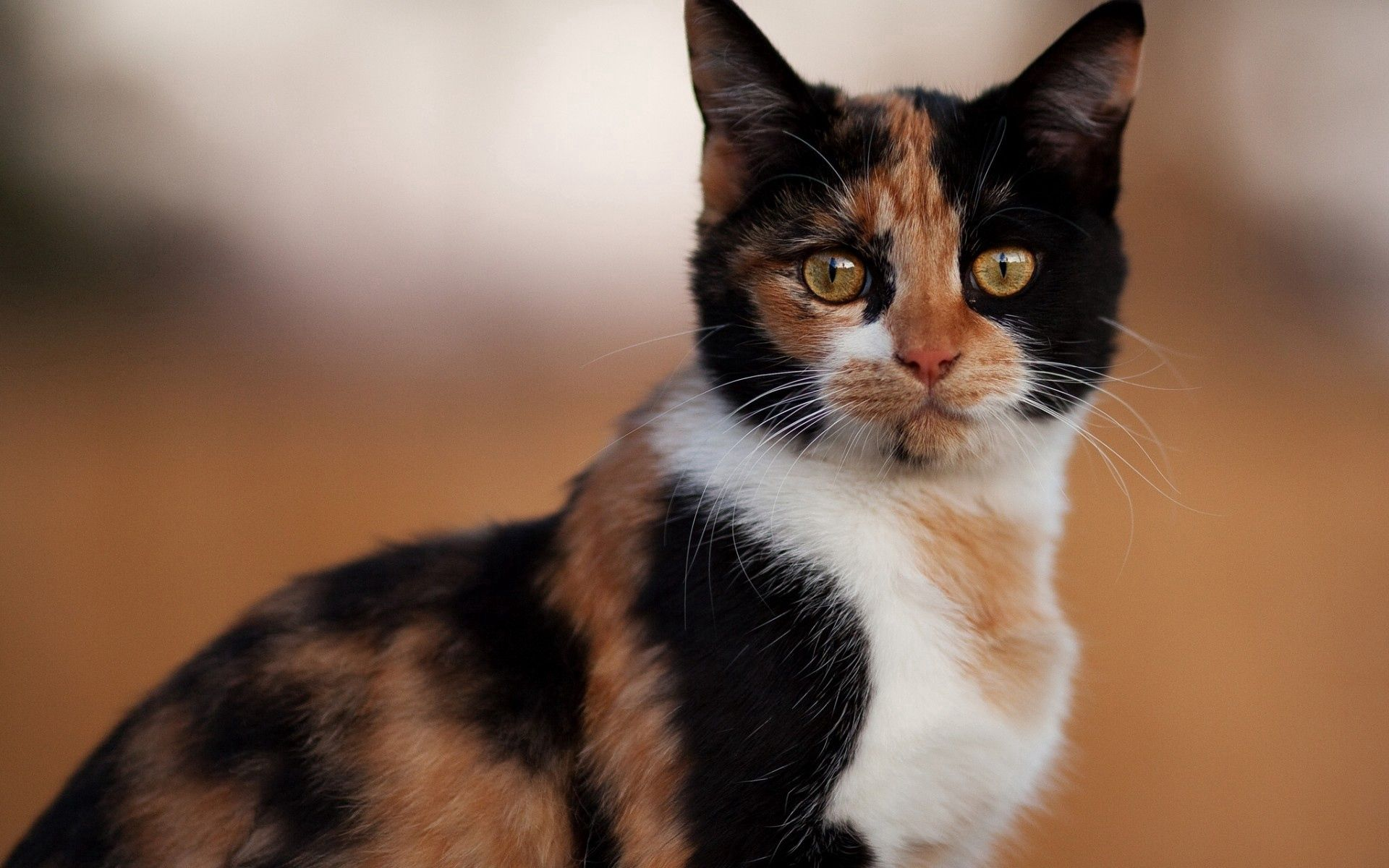55464 download wallpaper Animals, Cat, Spotted, Spotty, Color screensavers and pictures for free