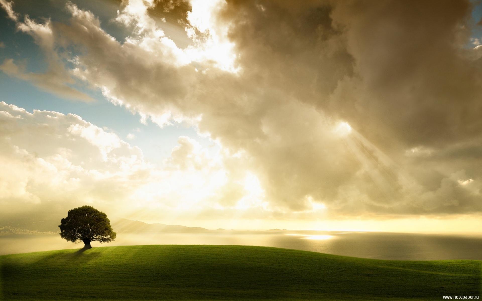 27310 скачать обои Пейзаж, Деревья, Поля, Облака - заставки и картинки бесплатно