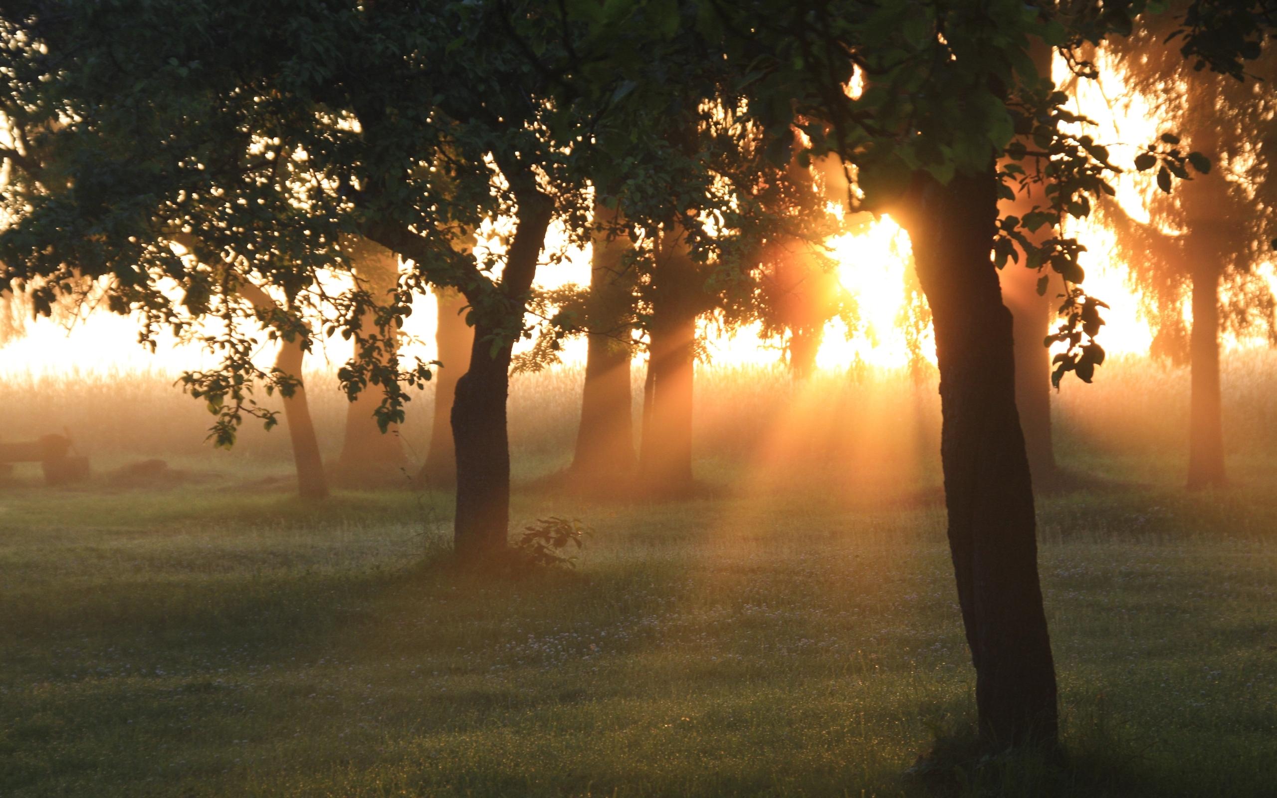 26029 скачать обои Пейзаж, Деревья, Закат, Солнце - заставки и картинки бесплатно