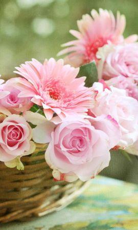 49913 скачать обои Растения, Цветы - заставки и картинки бесплатно