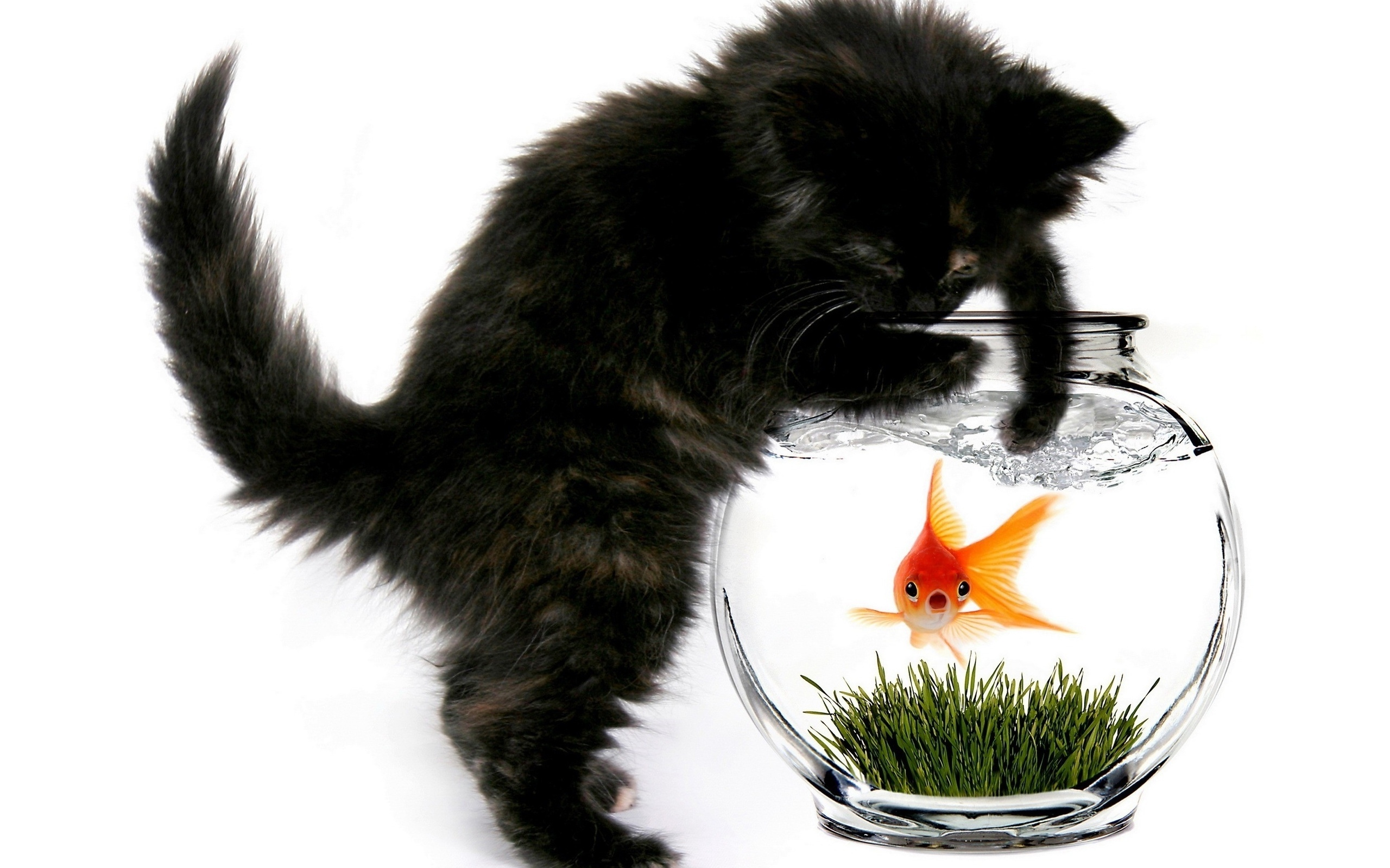 27716 download wallpaper Animals, Cats, Aquariums, Fishes screensavers and pictures for free